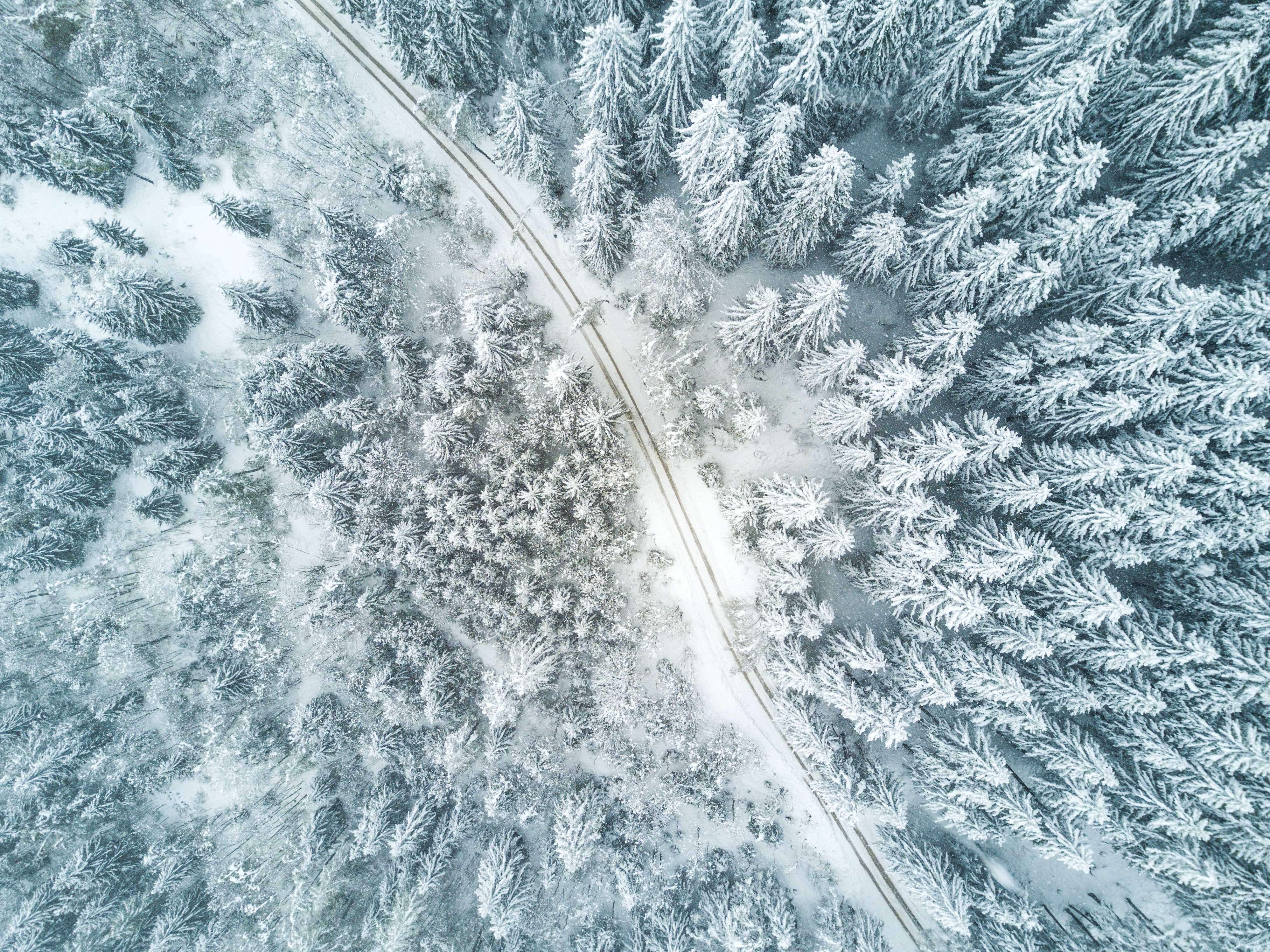 bird's eye view of snow forest