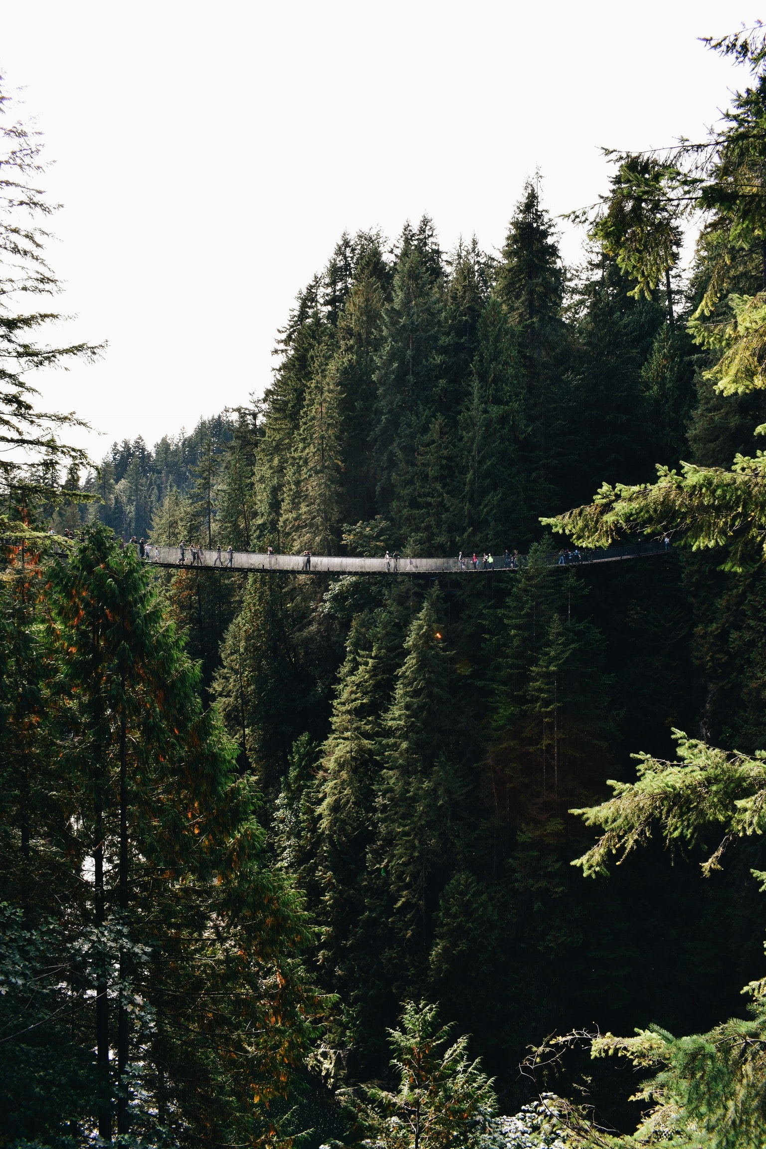 hanging bridge surrounded by forest