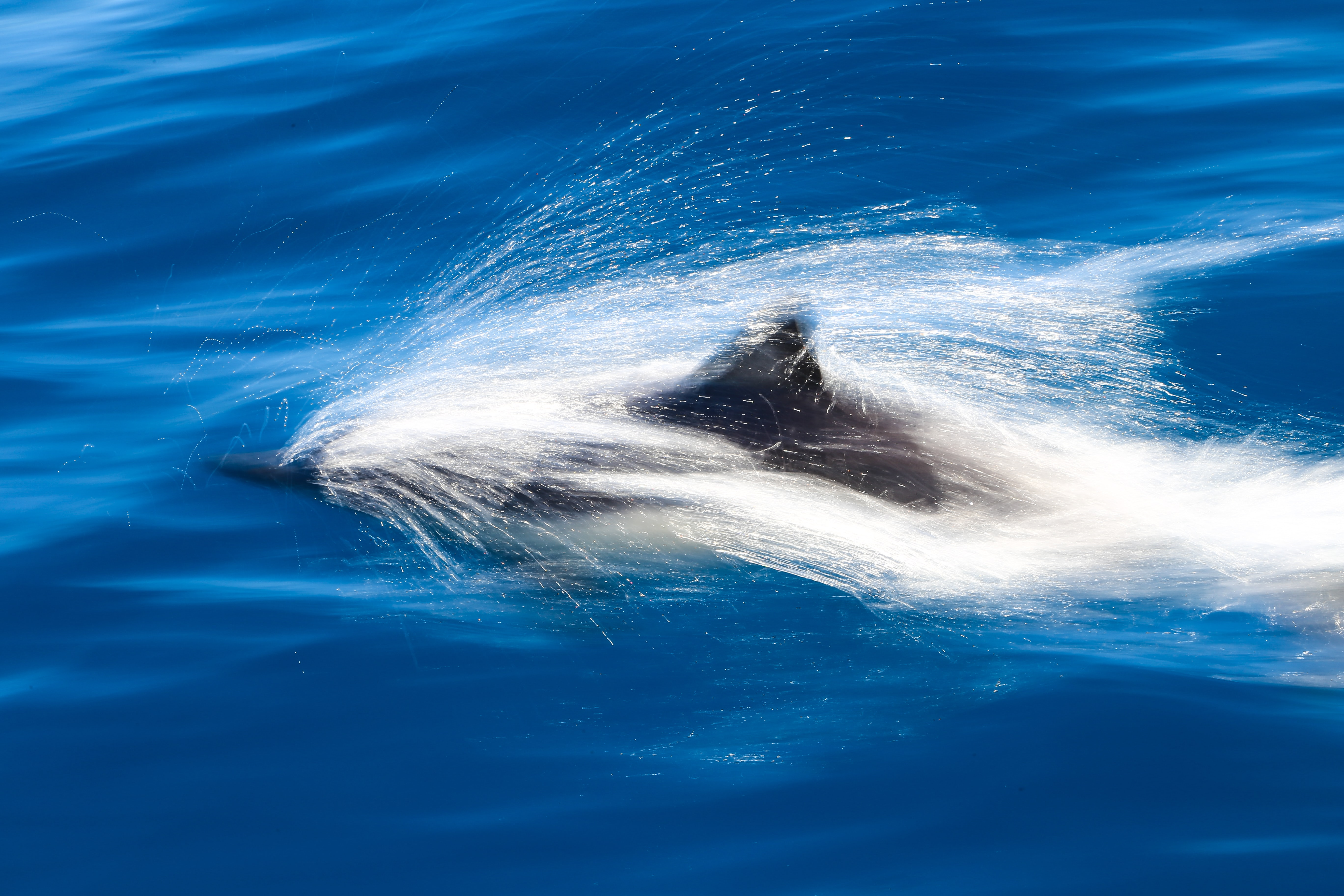 photo of dolphin above water during daytime