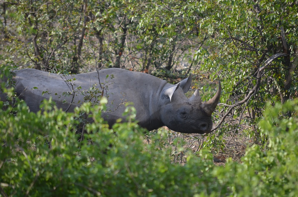 selective focus photography of rhinoceros