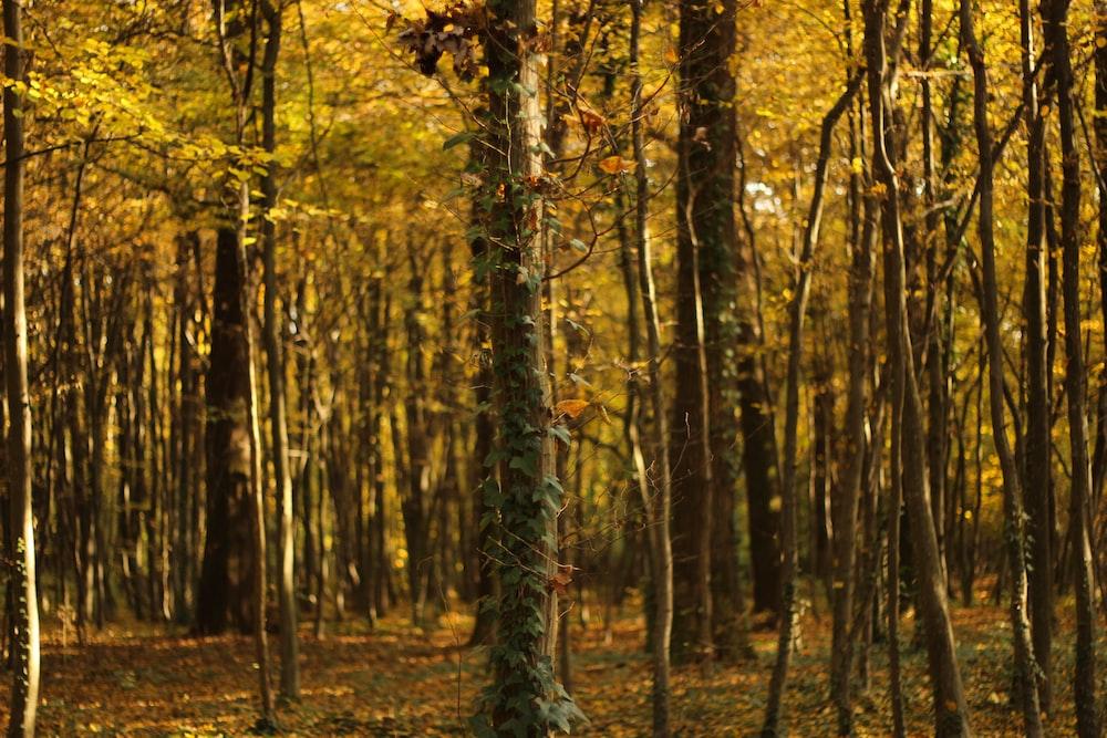 yellow leaf forest