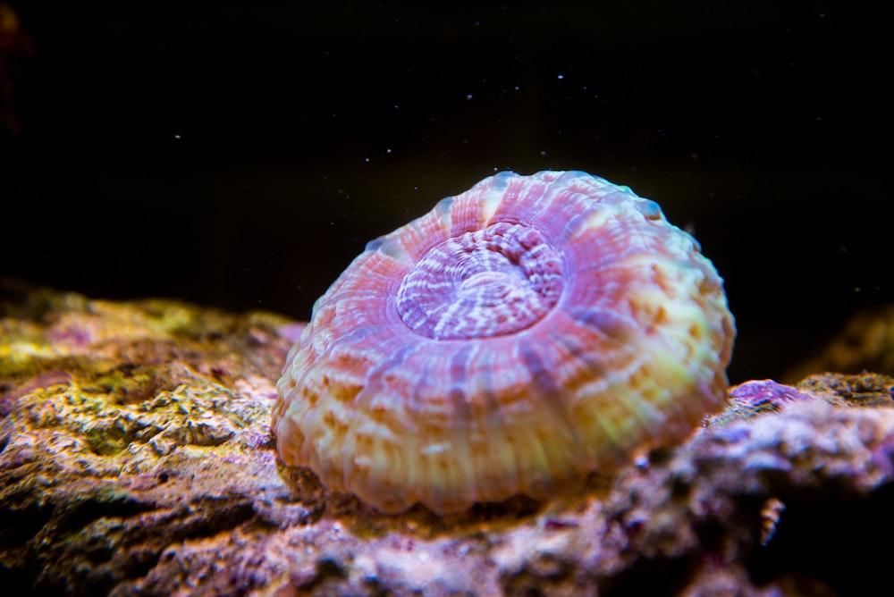 macro photography brown coral