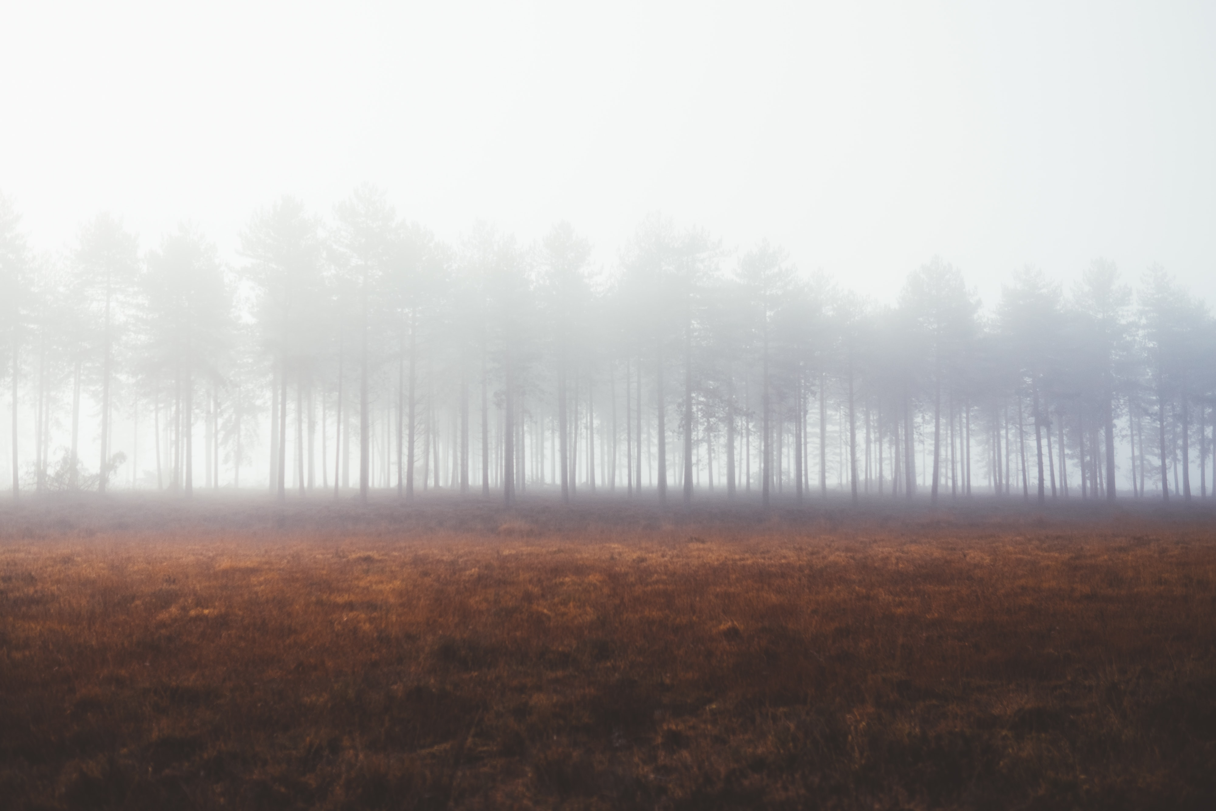forest covered by fog