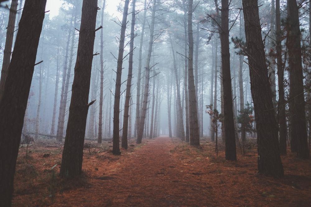forest full of fog
