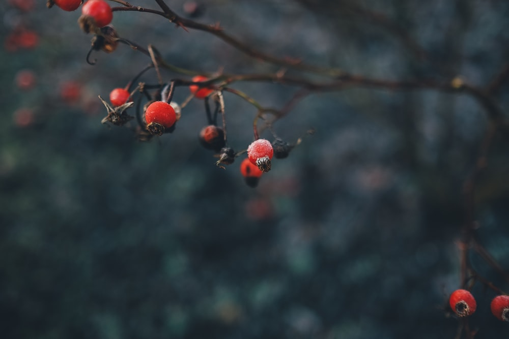 selective focus photography of red fruit