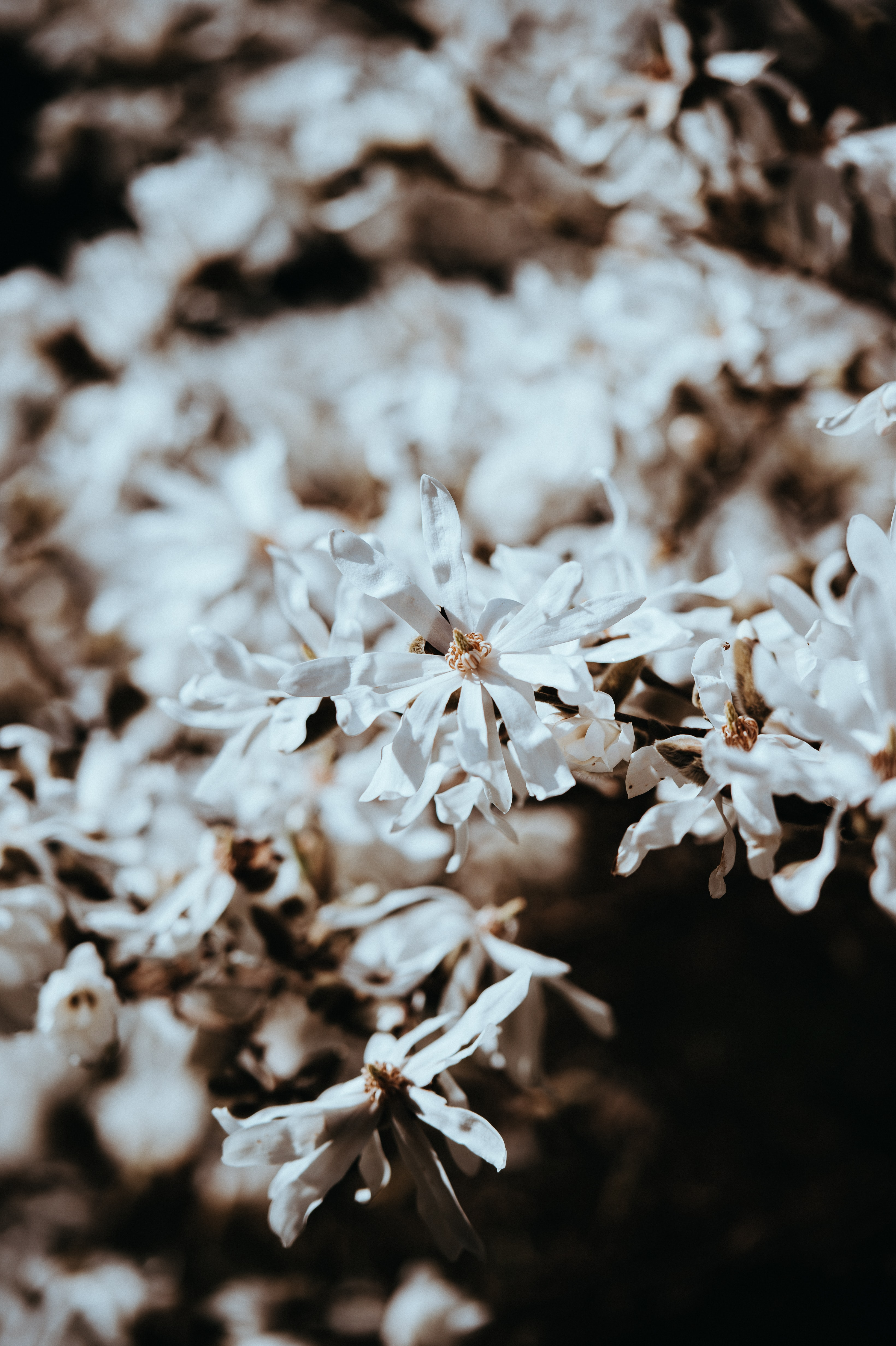 selective focus of white petaled flower