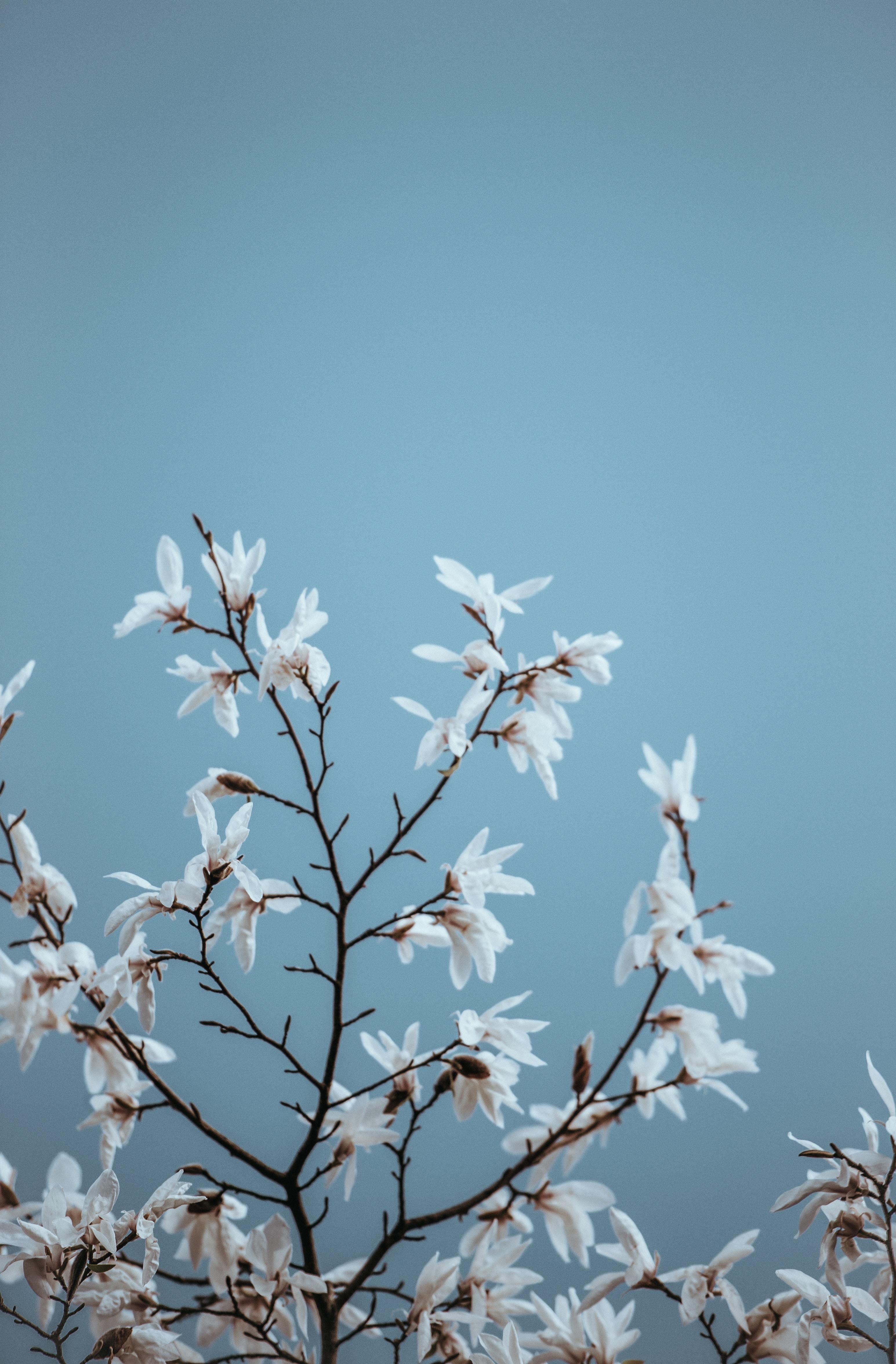 tilt shift photography of white leaves plant