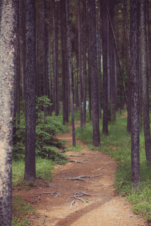 road between gray trees at daytime]