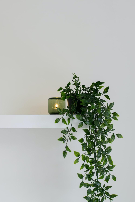 green leafed plant place on floating shelf