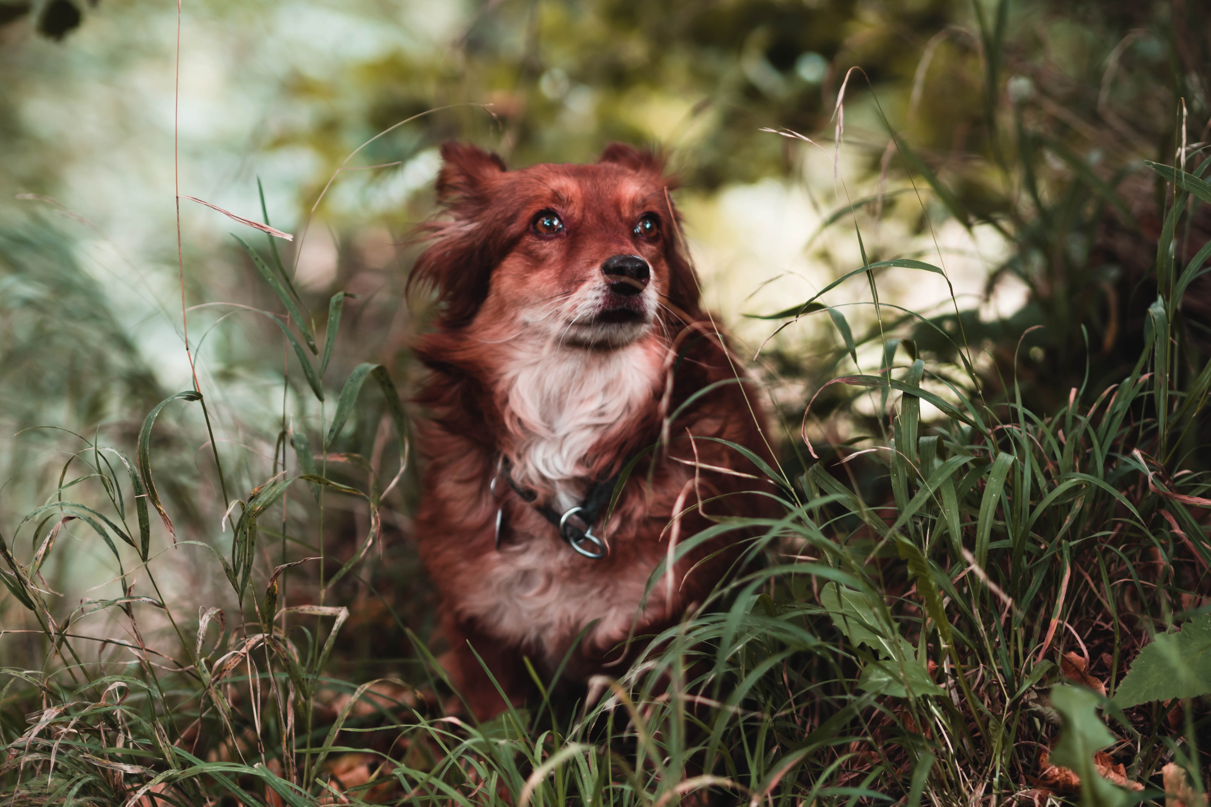 brown dog in grasses