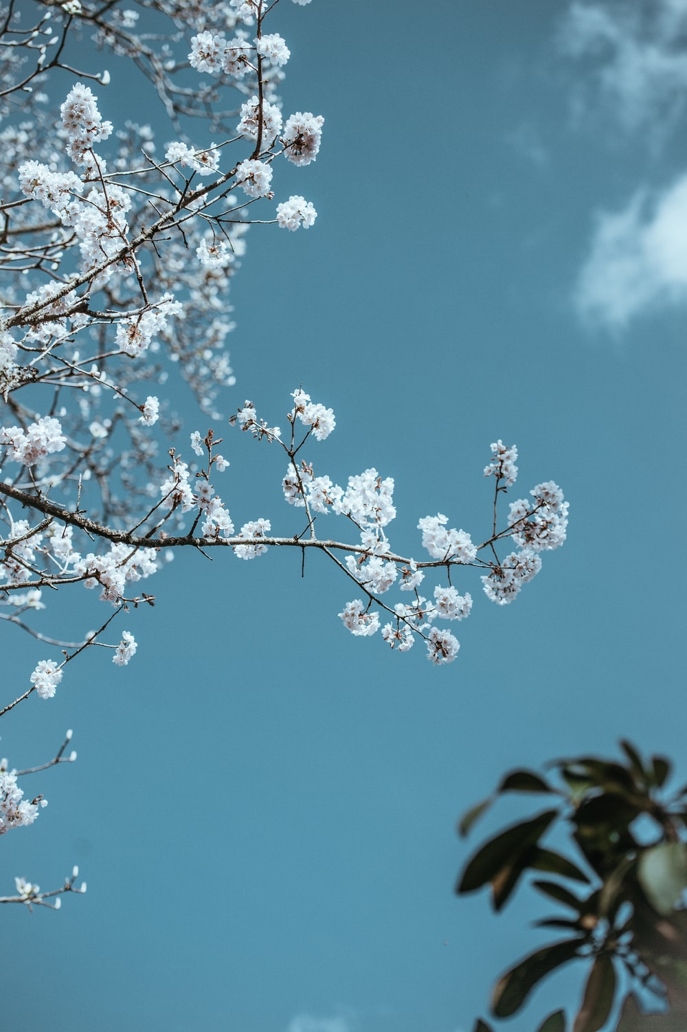 low angle photo of cherry blossoms