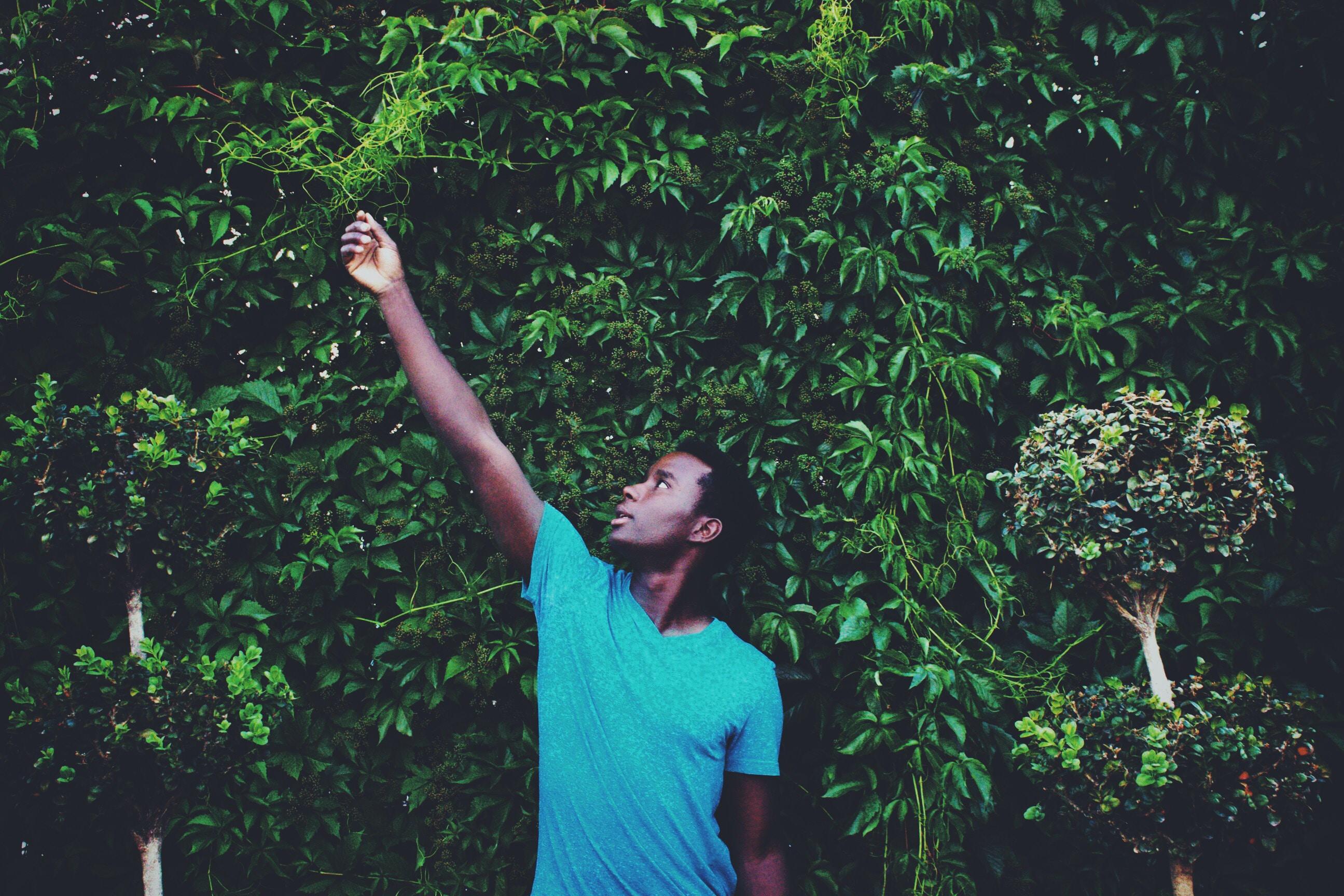 man standing while reaching leaf during daytime
