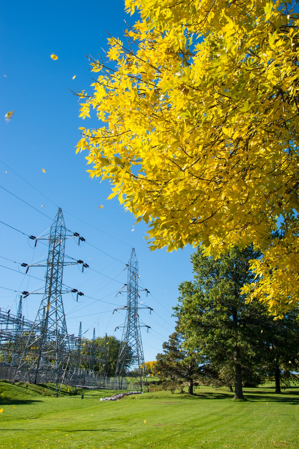 yellow petaled tree on green grass field near cable posts