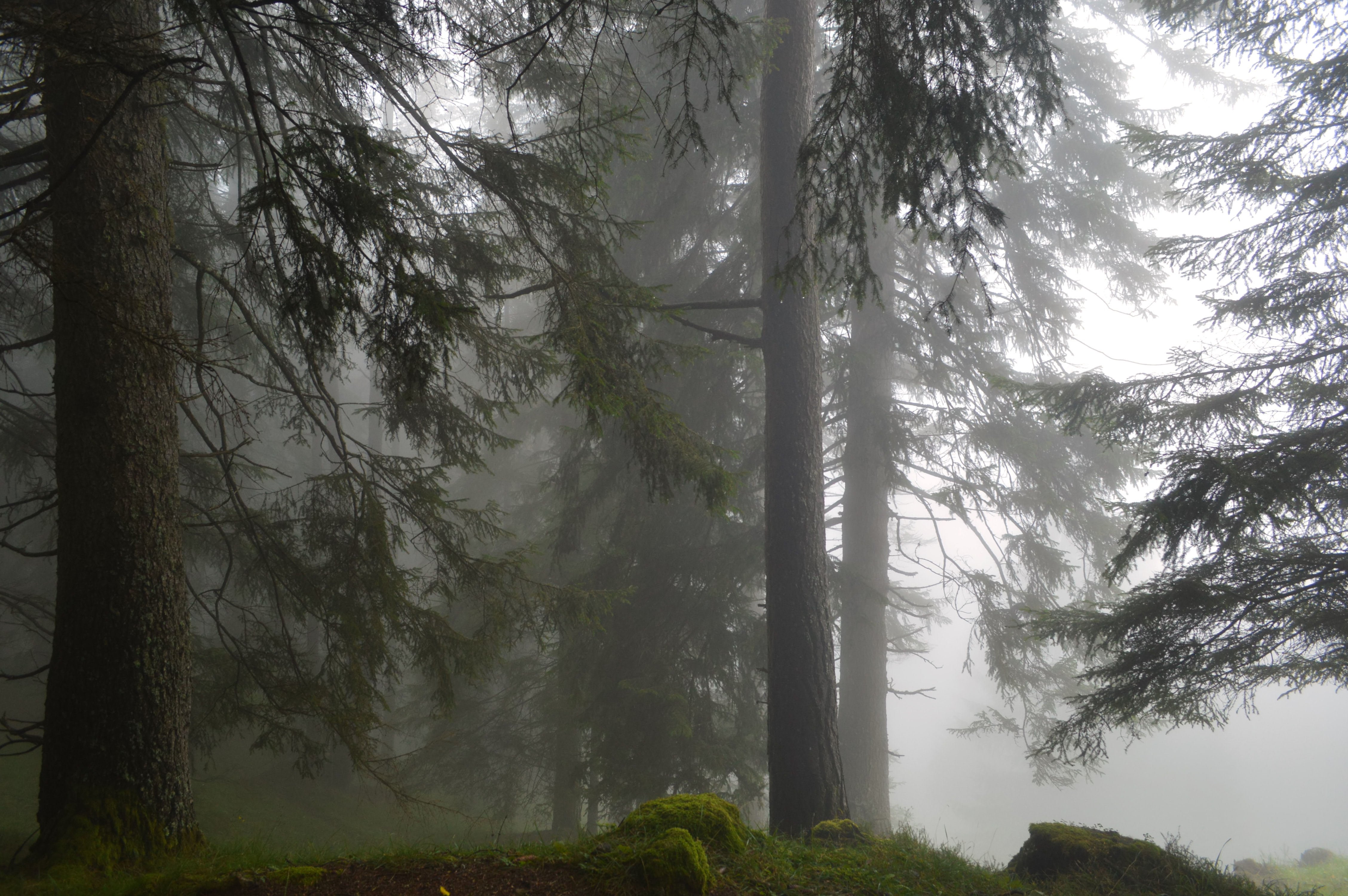 photo of trees covered with fogs