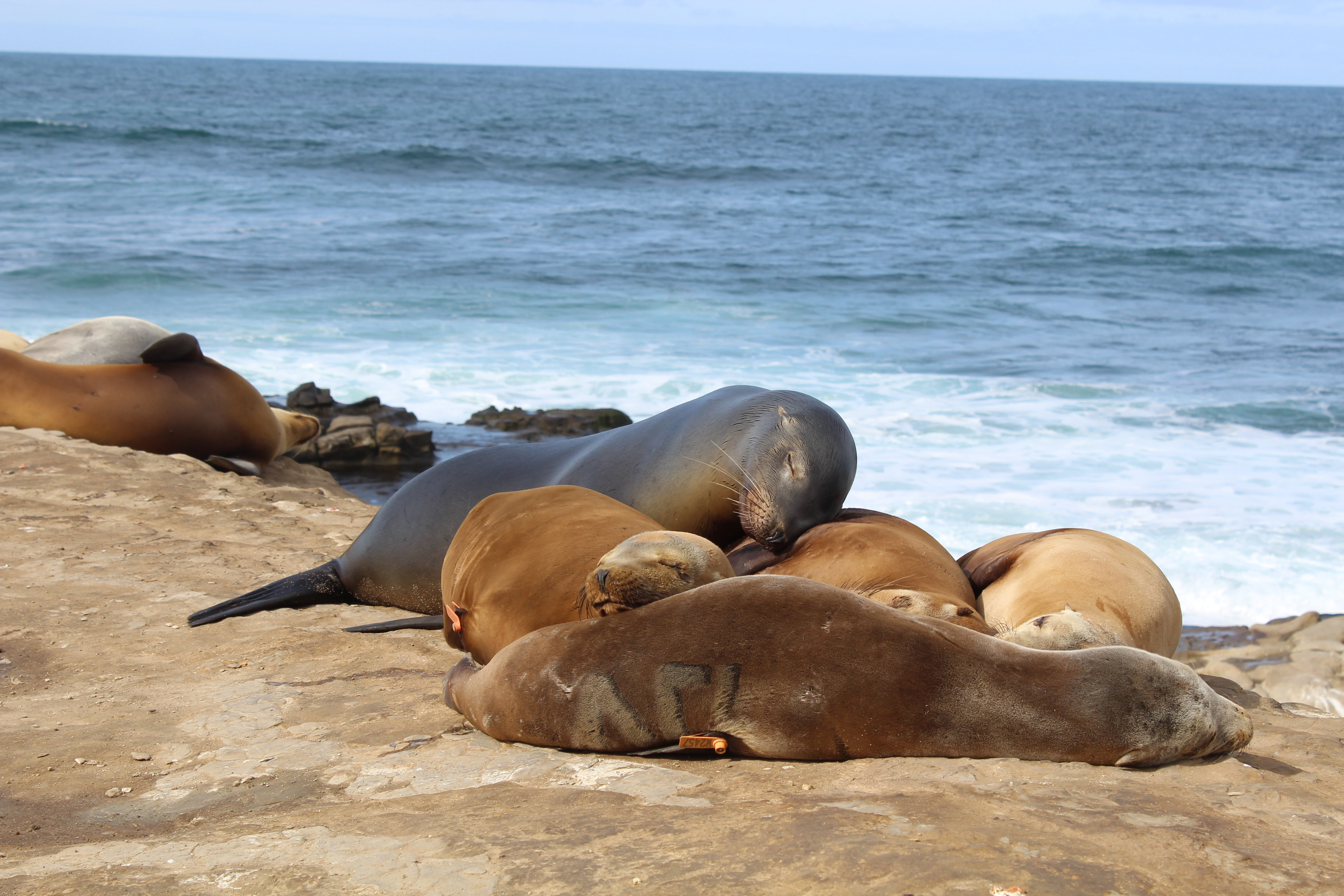 sea lions on land resting next to sea