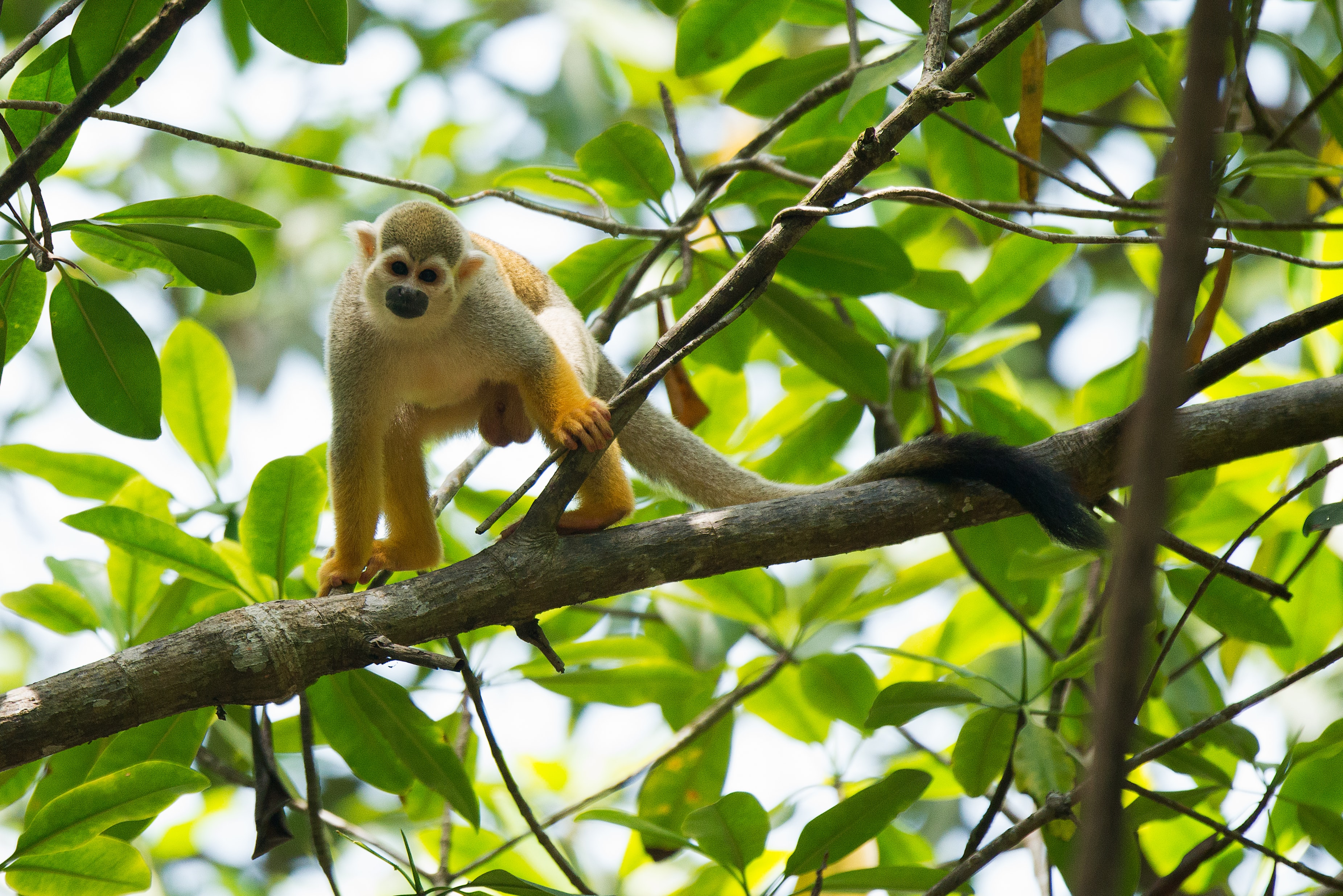 monkey on tree branch