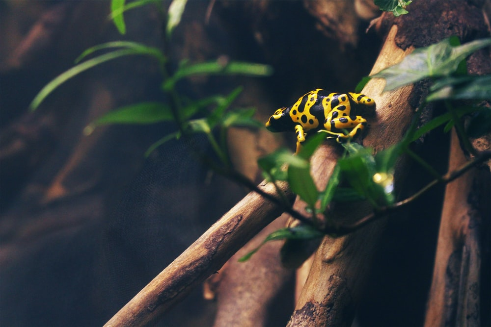 yellow frog on tree branch