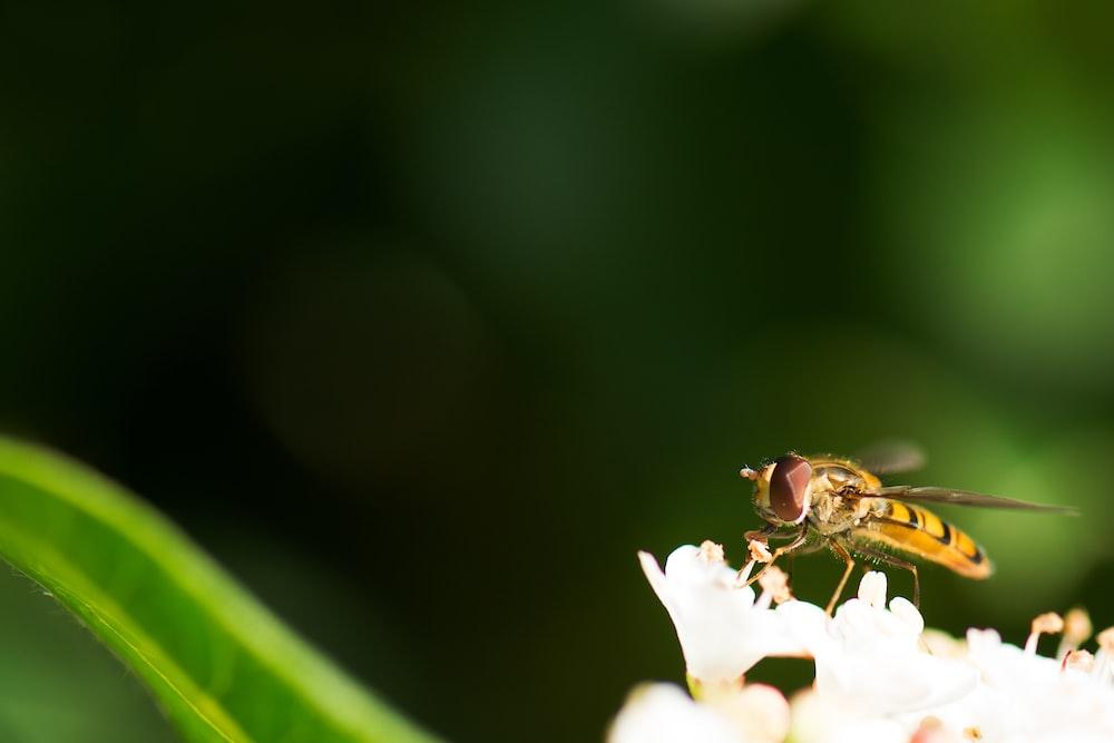 macro shot photo of bee