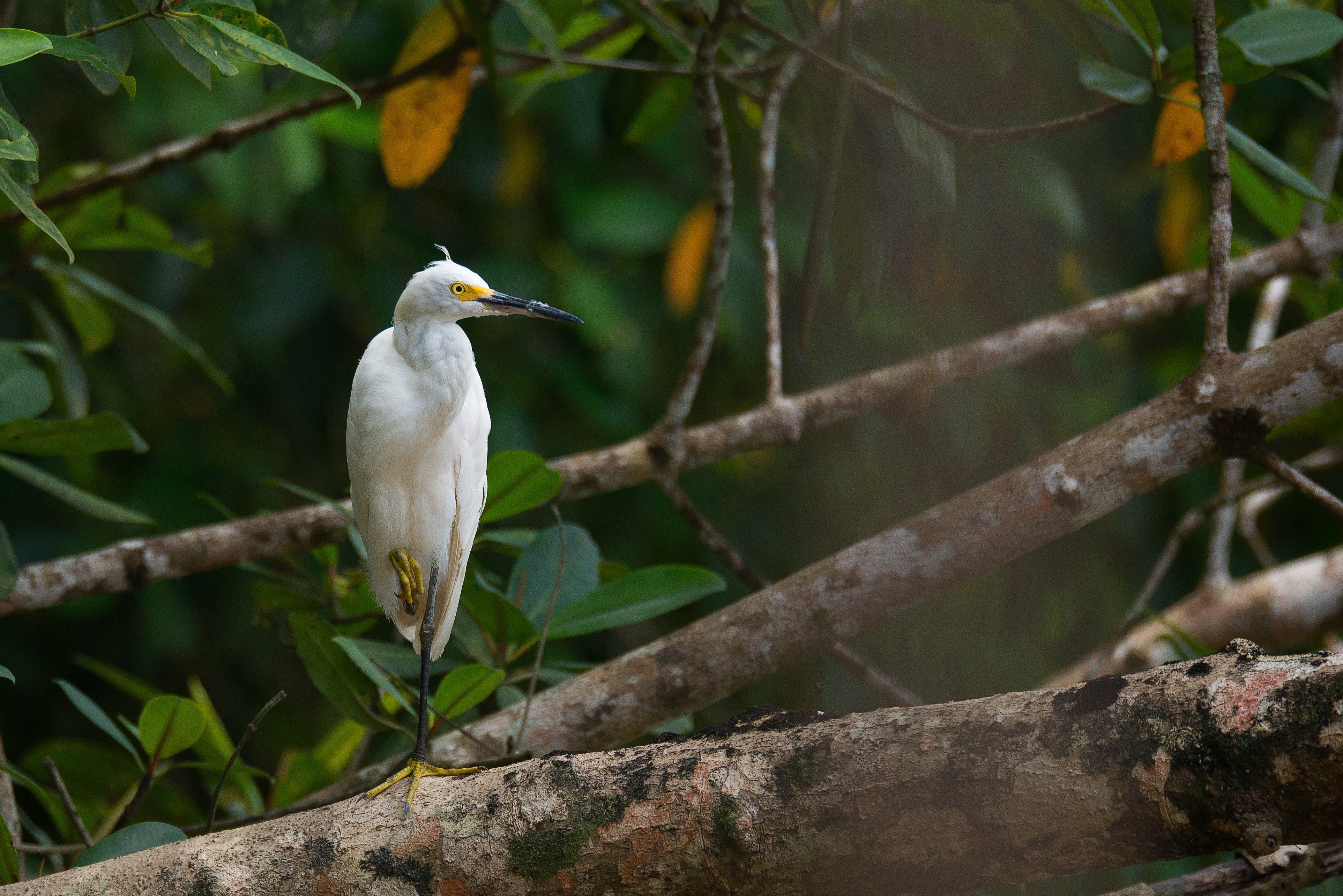 white bird perched on tree branch