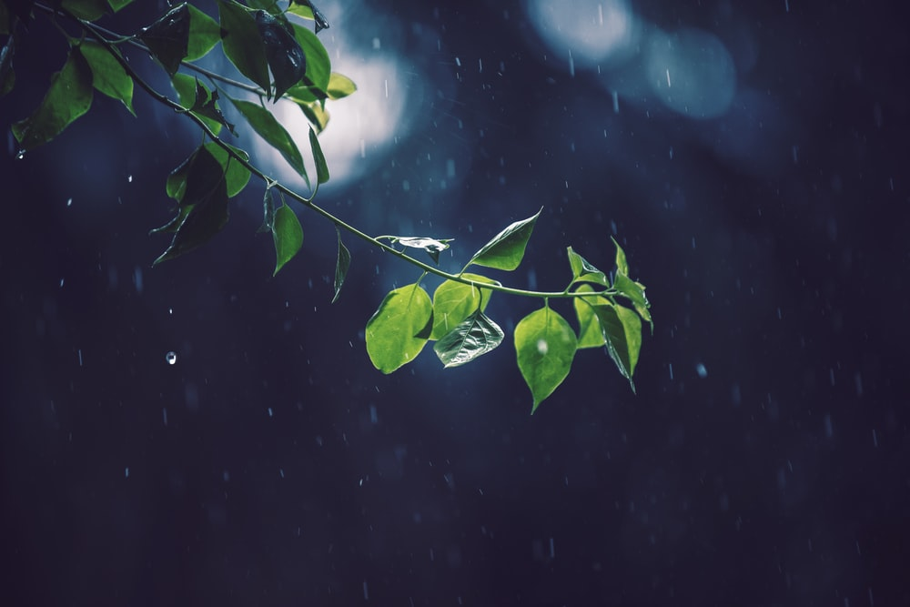 selective focus photography of green leafed tree