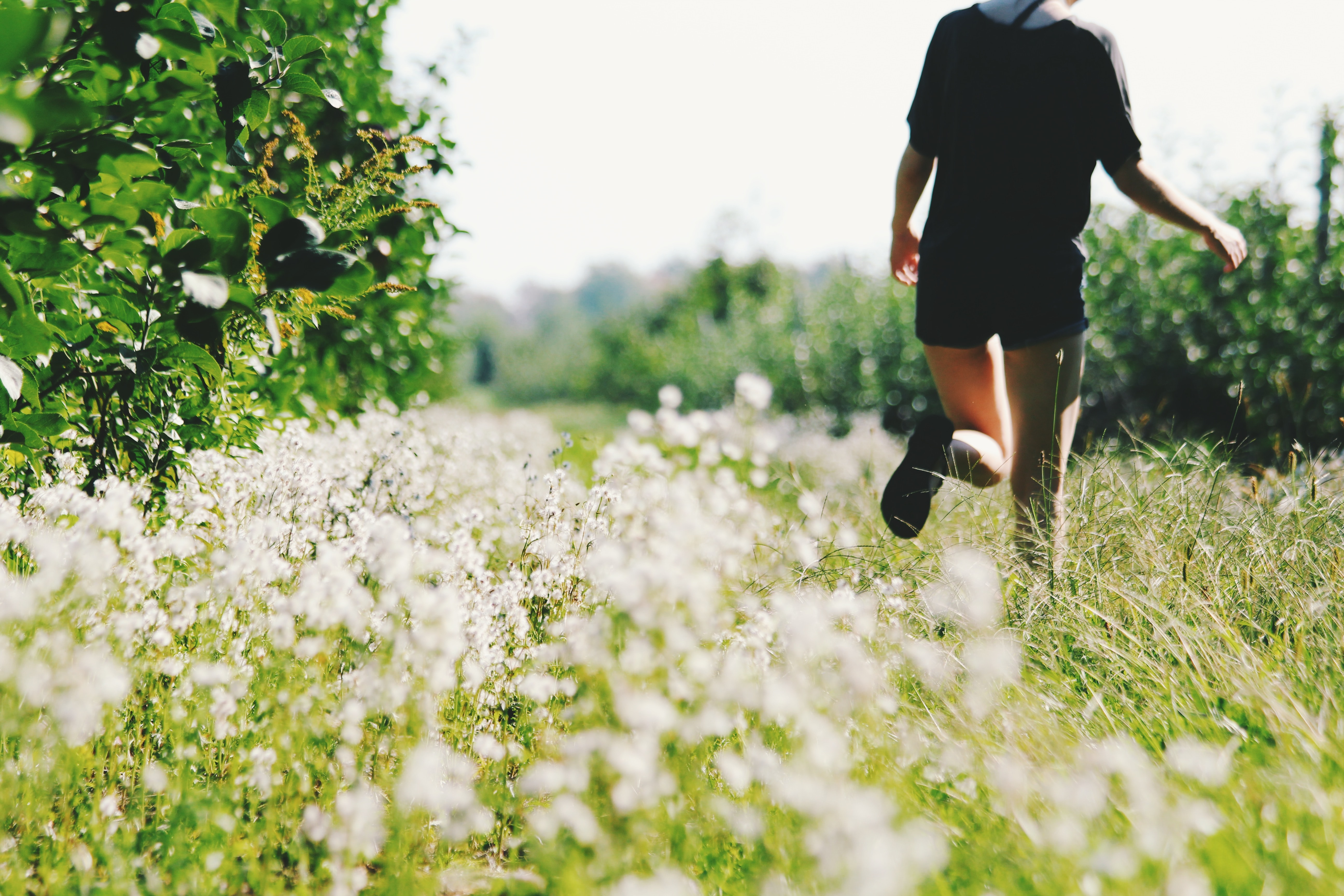 person walking on white flower field