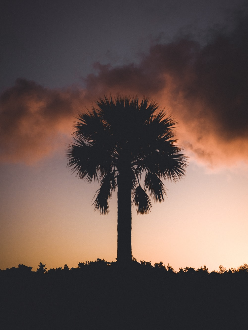 silhouette of palm tree at golden hour