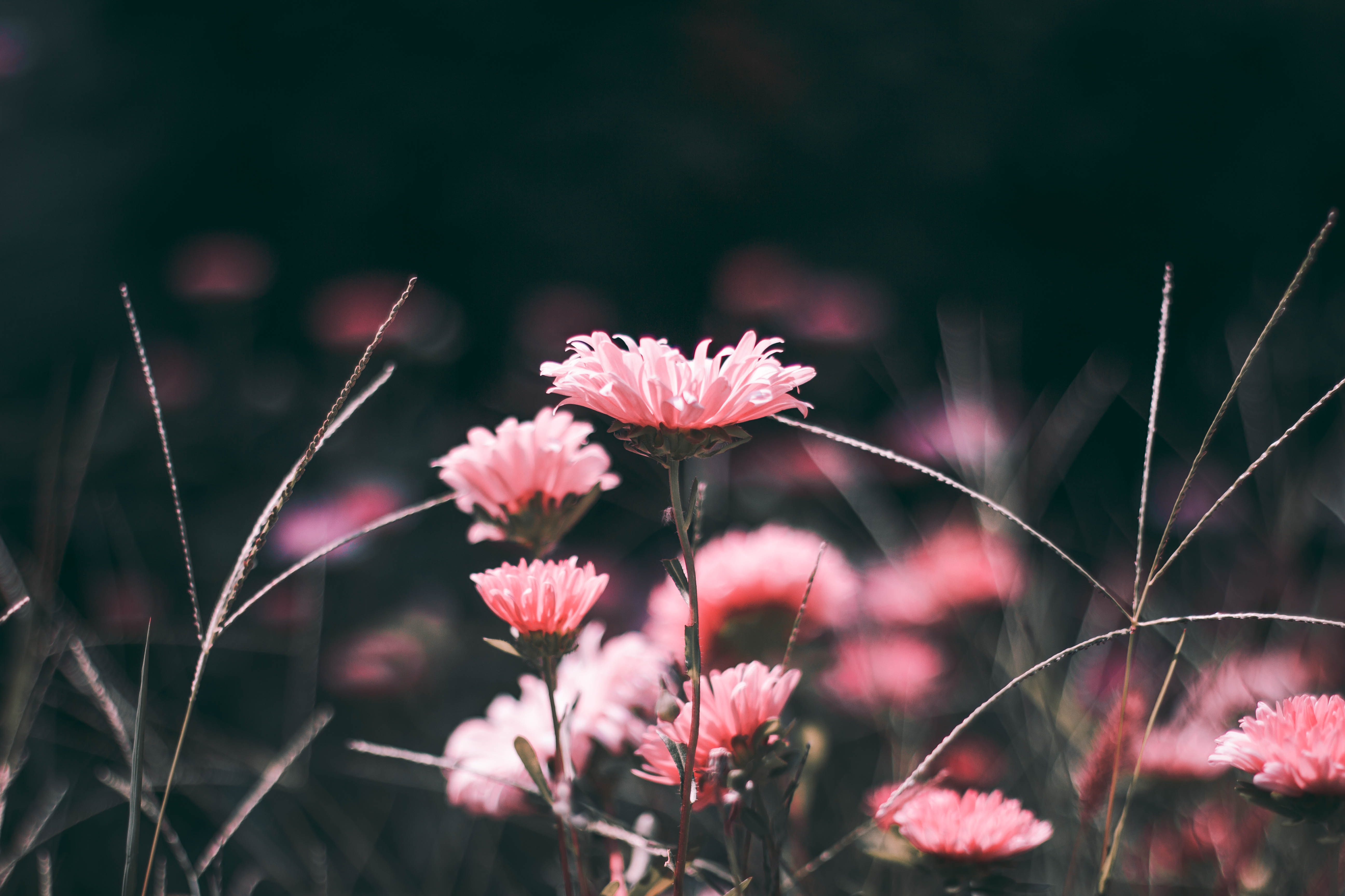 pink flowers in macro shot photography
