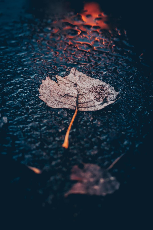 brown leaf on asphalt road