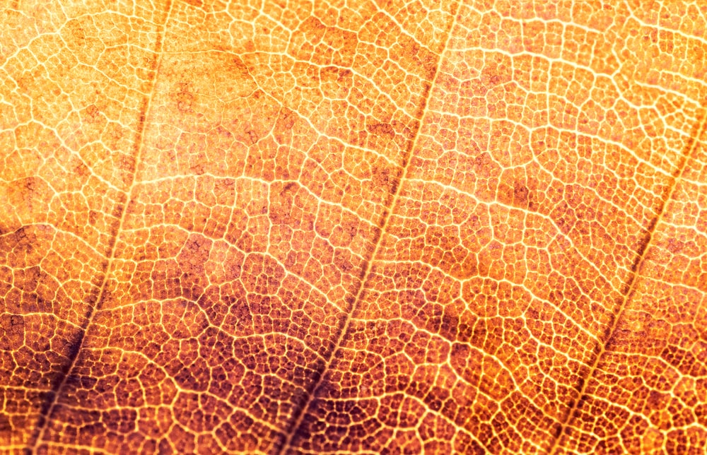 micro photograph of leaf