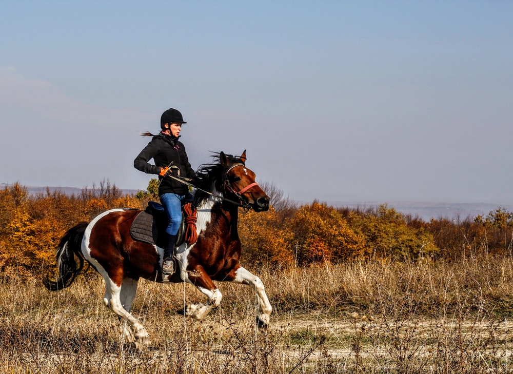 person riding on horse