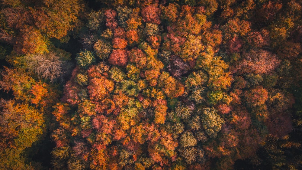 aerial photograph of forest