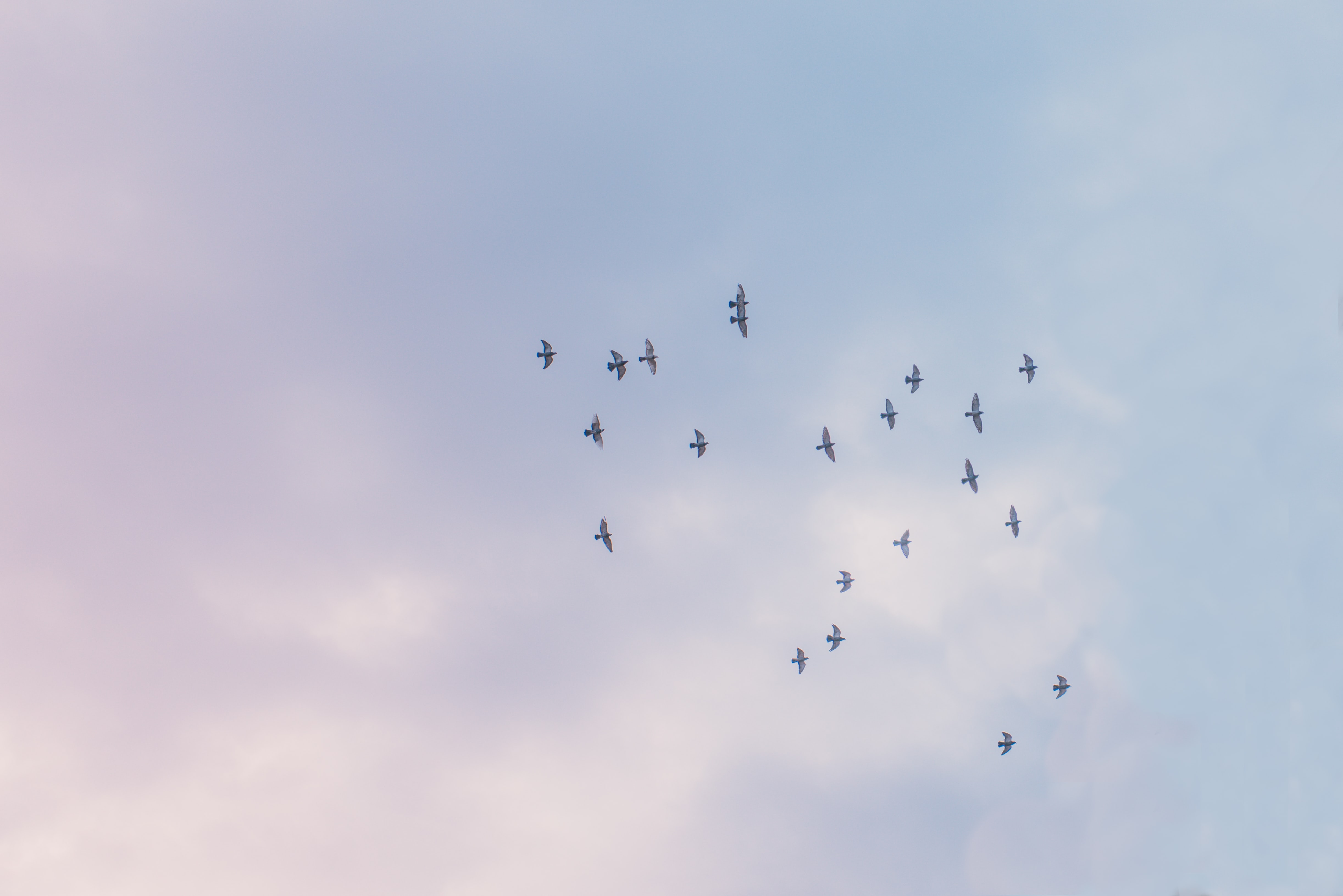 birds flying under white sky