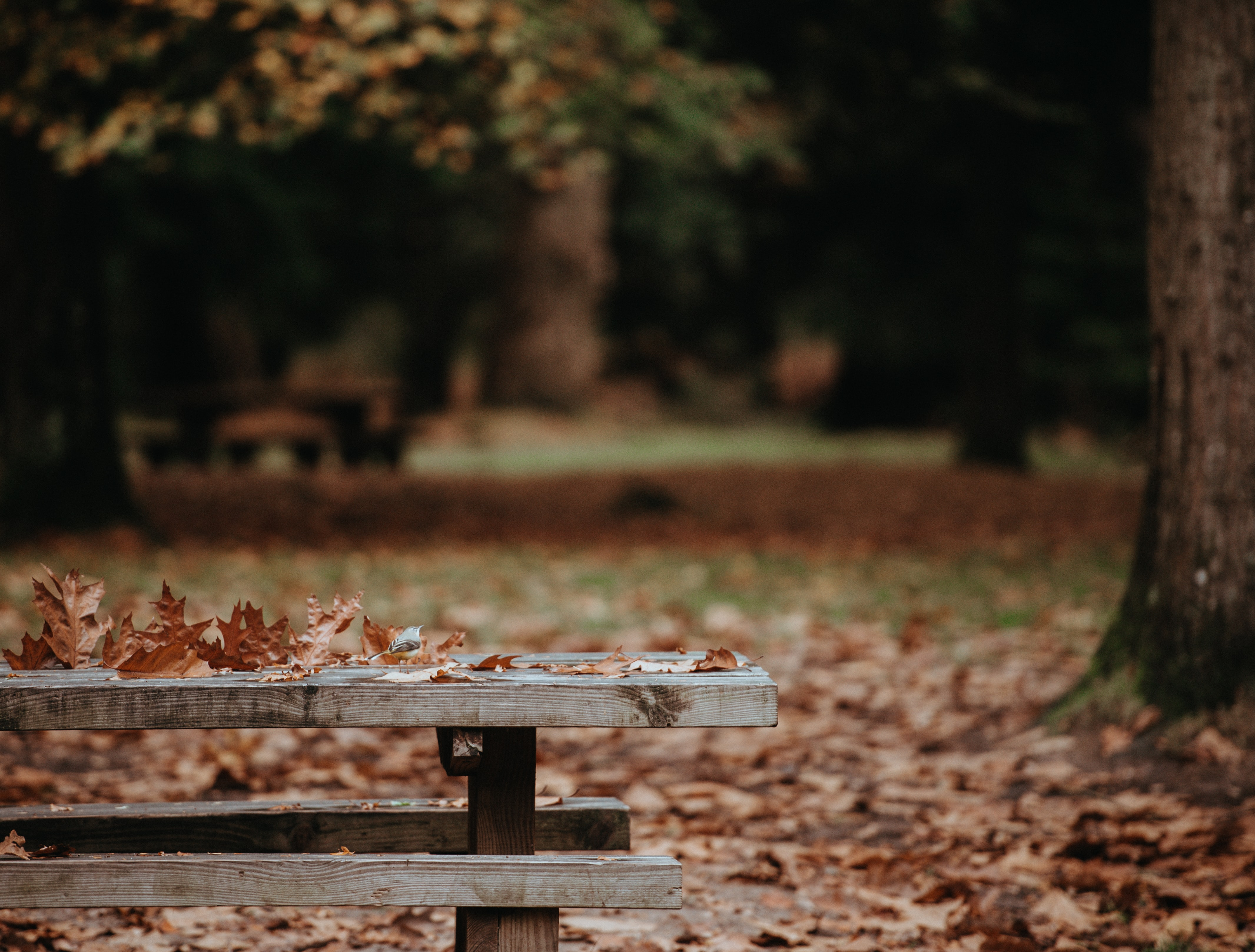 withered leaves on gray wooden bench