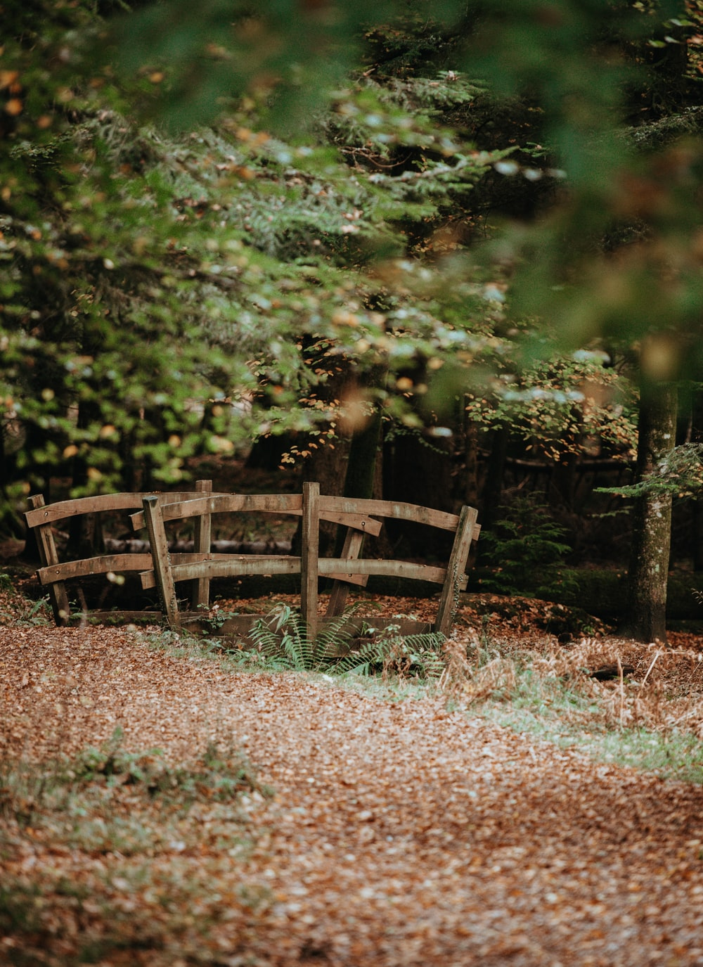 brown bridge near trees