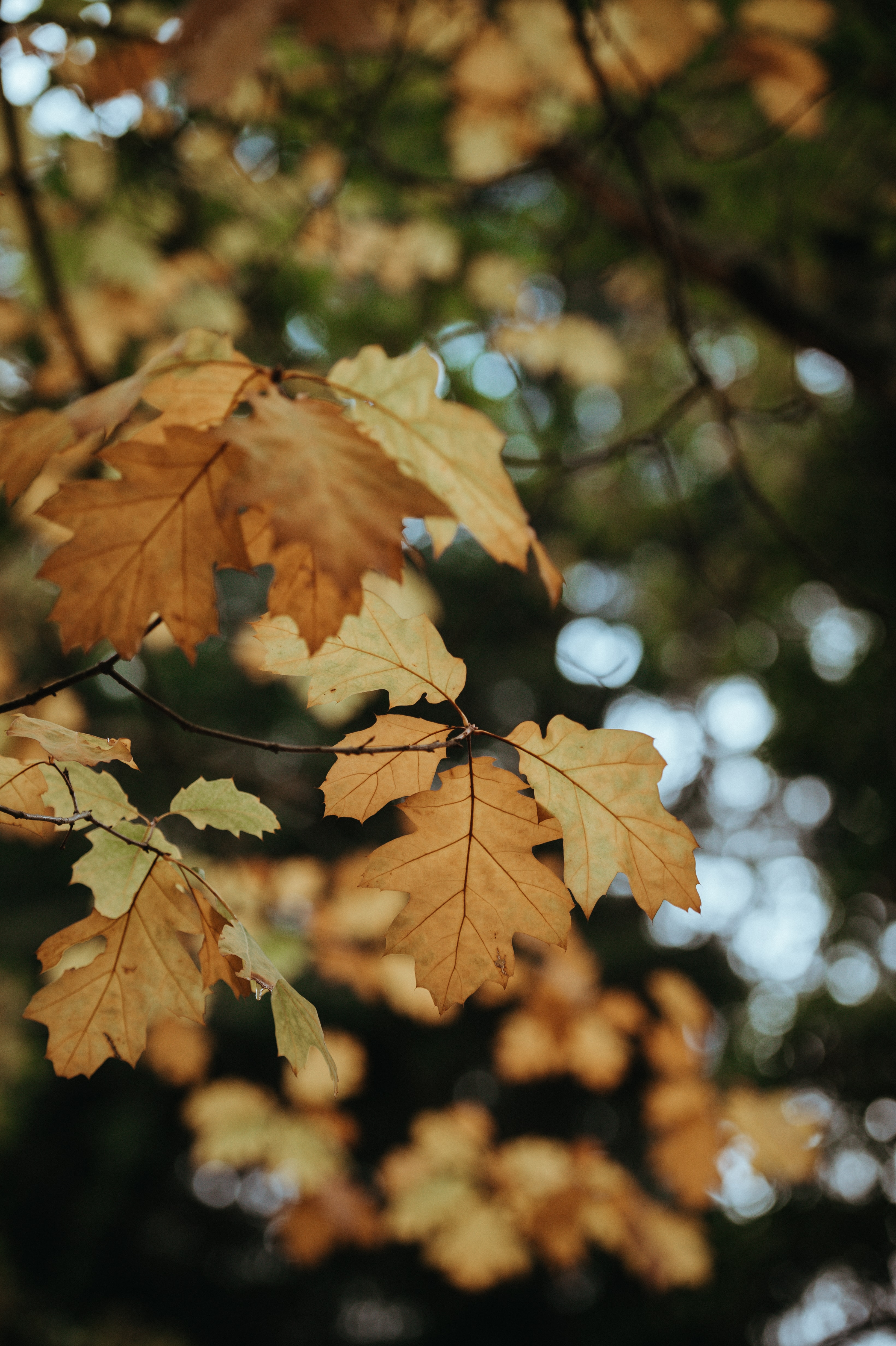 low angel photography of brown leaves