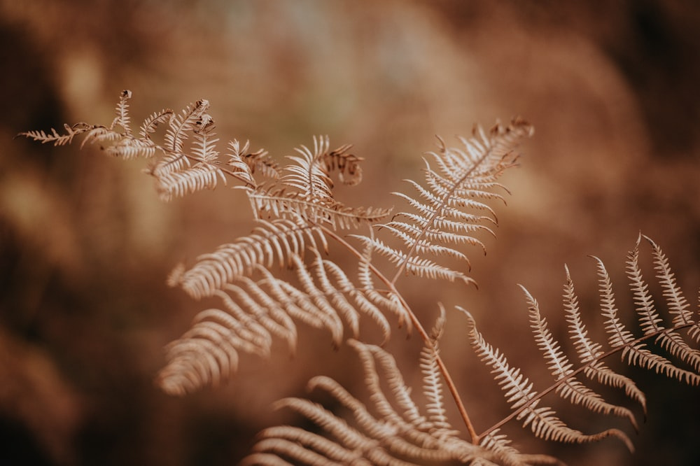 closeup photography of fern