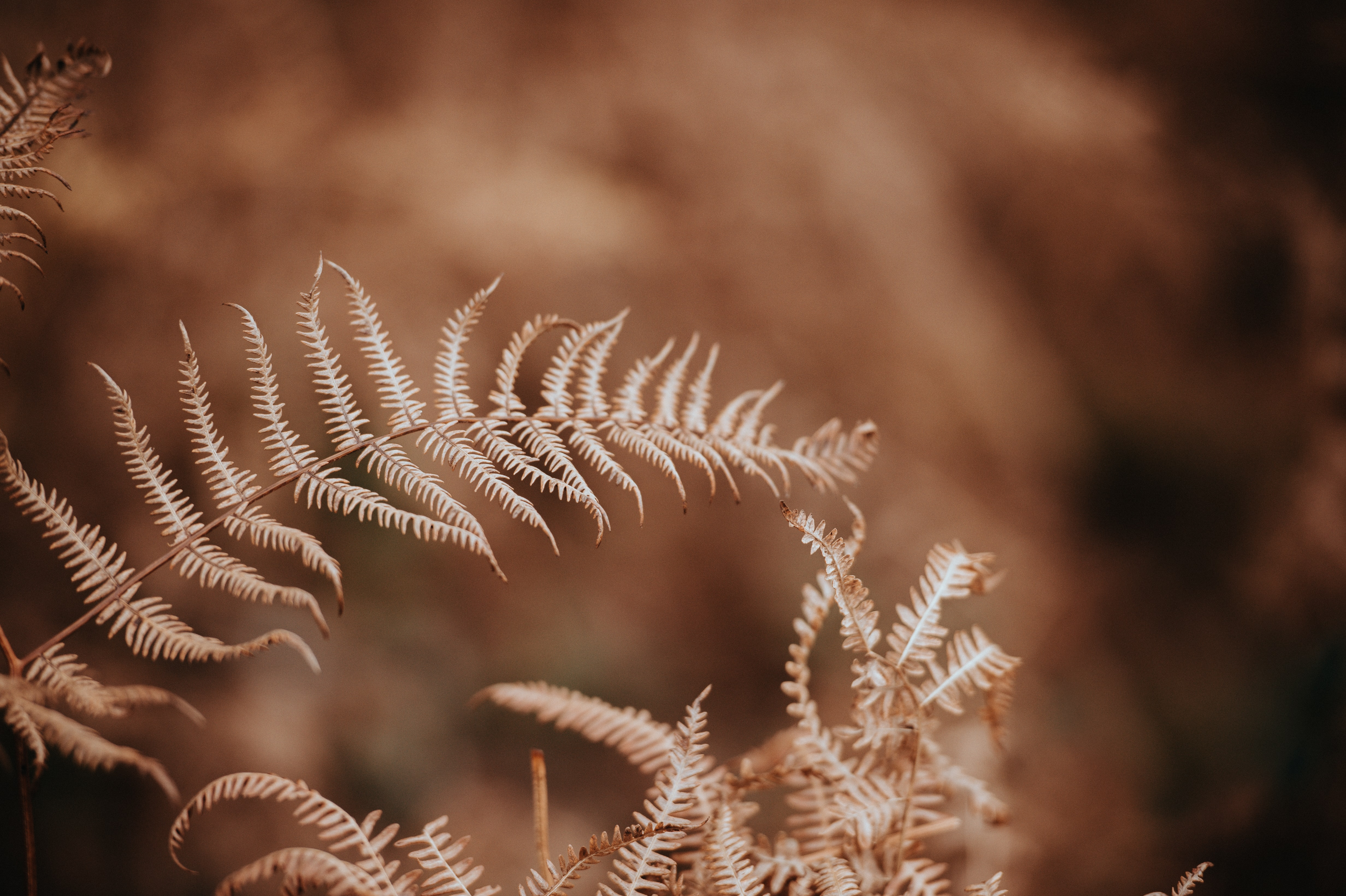 fern plans in sepia photography