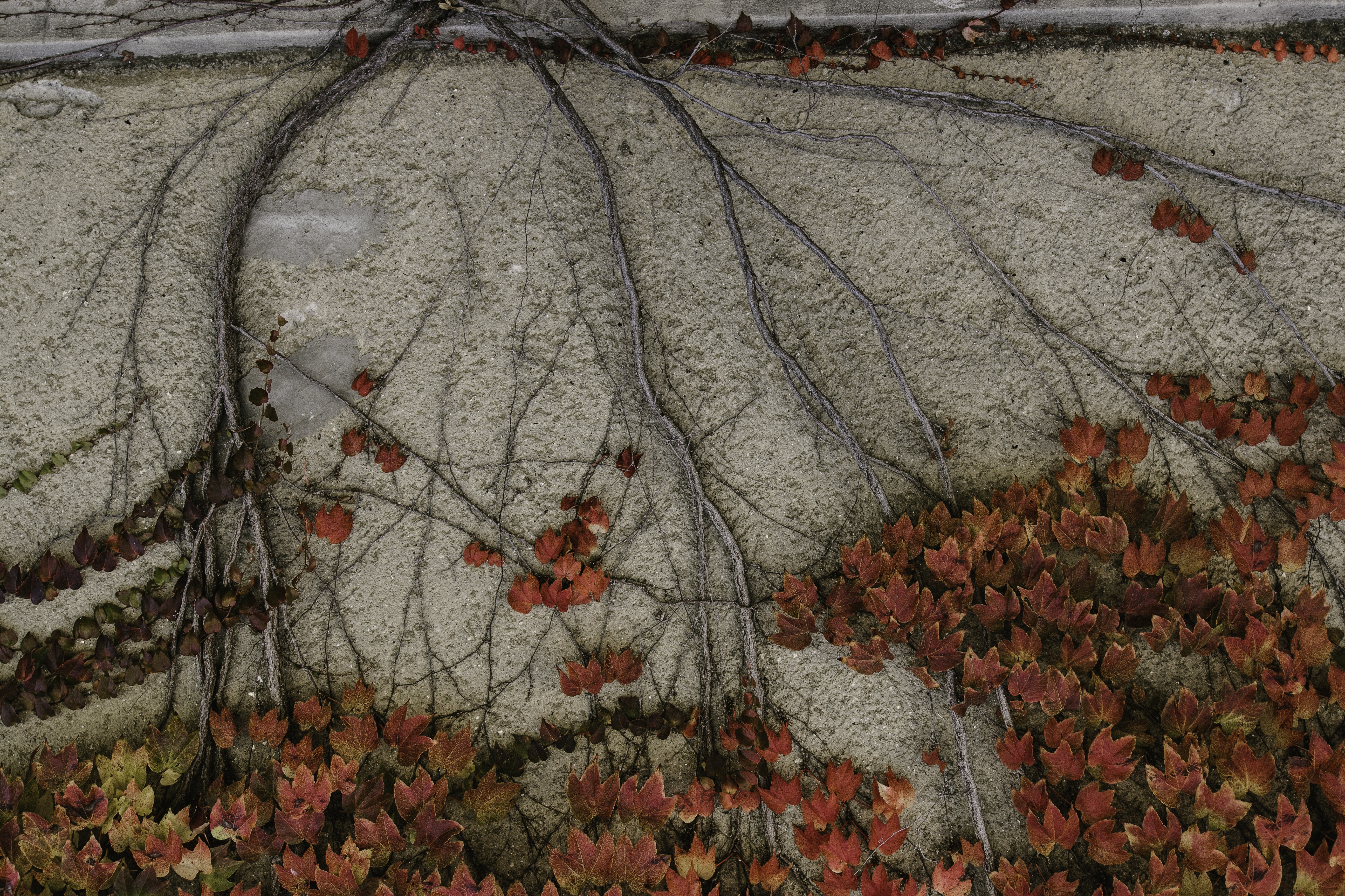 red leafed plants on gray concrete surface