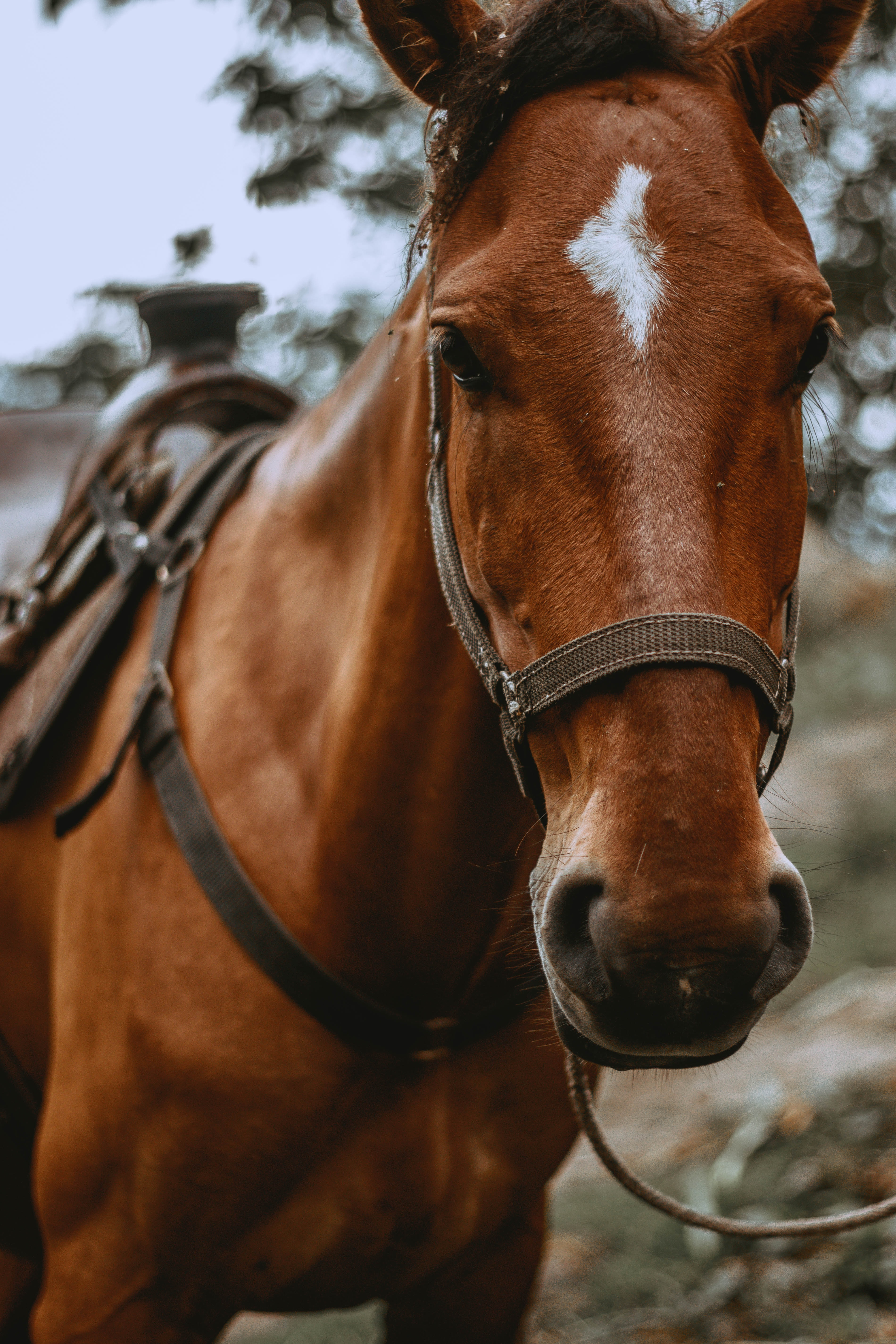 photo of brown horse