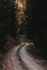 gray road in between trees at daytime