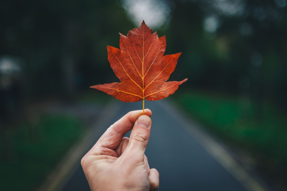 person holding leaf
