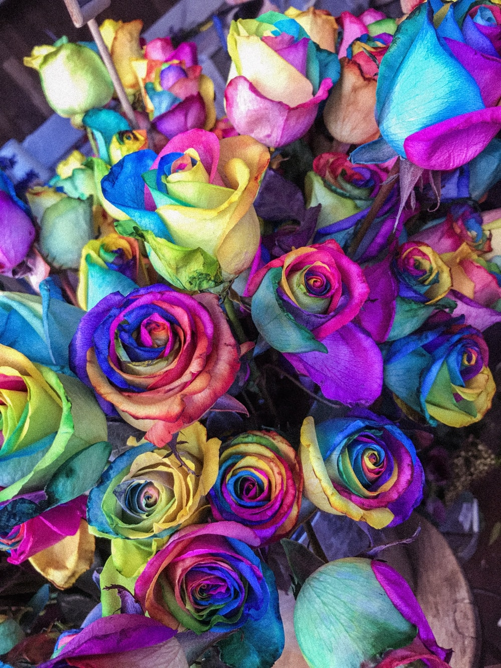 closeup of multicolored petaled roses
