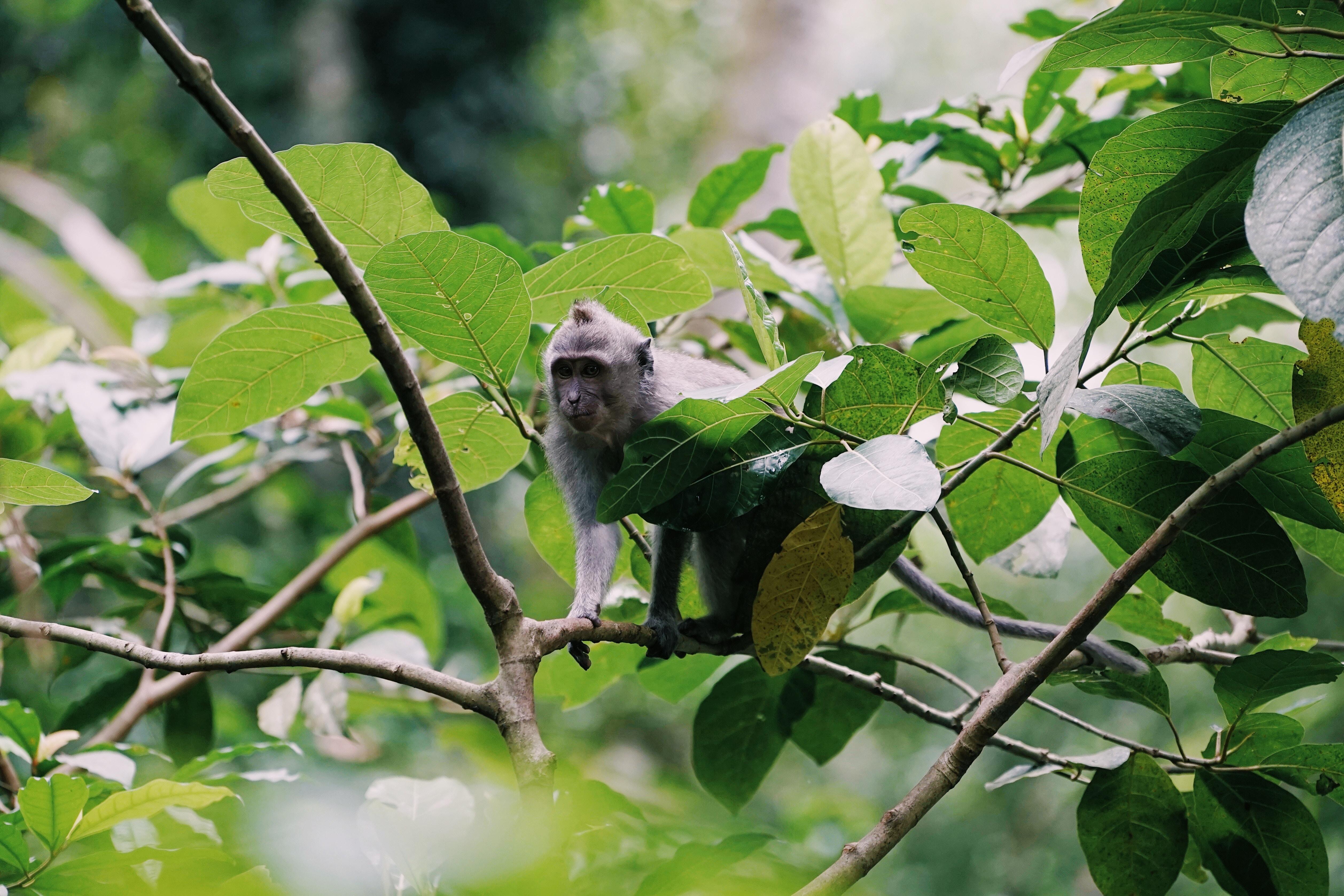 monkey on branch at daytime
