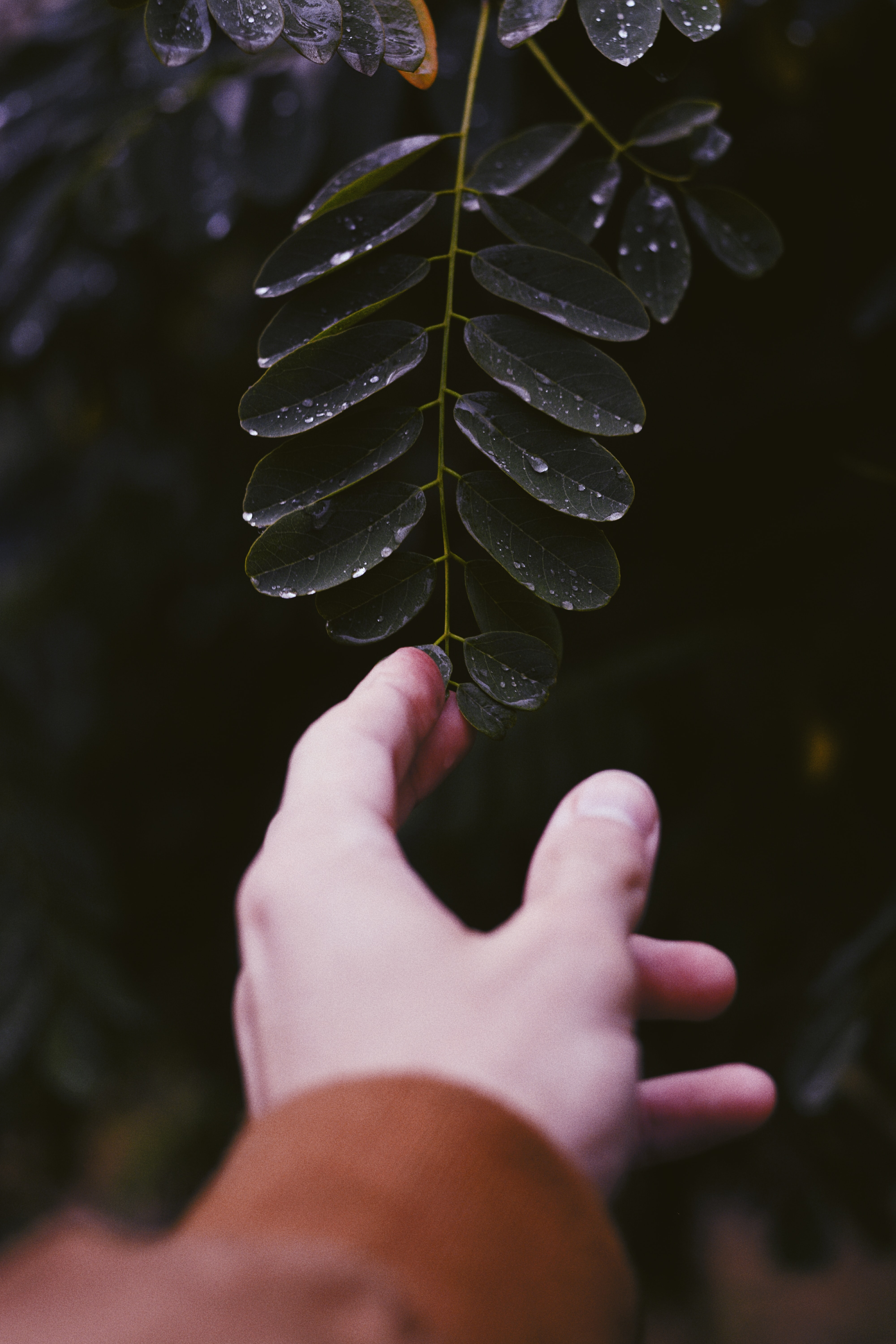person touching green leaf plant with water dew