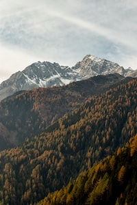 mountains coated with trees during daytime
