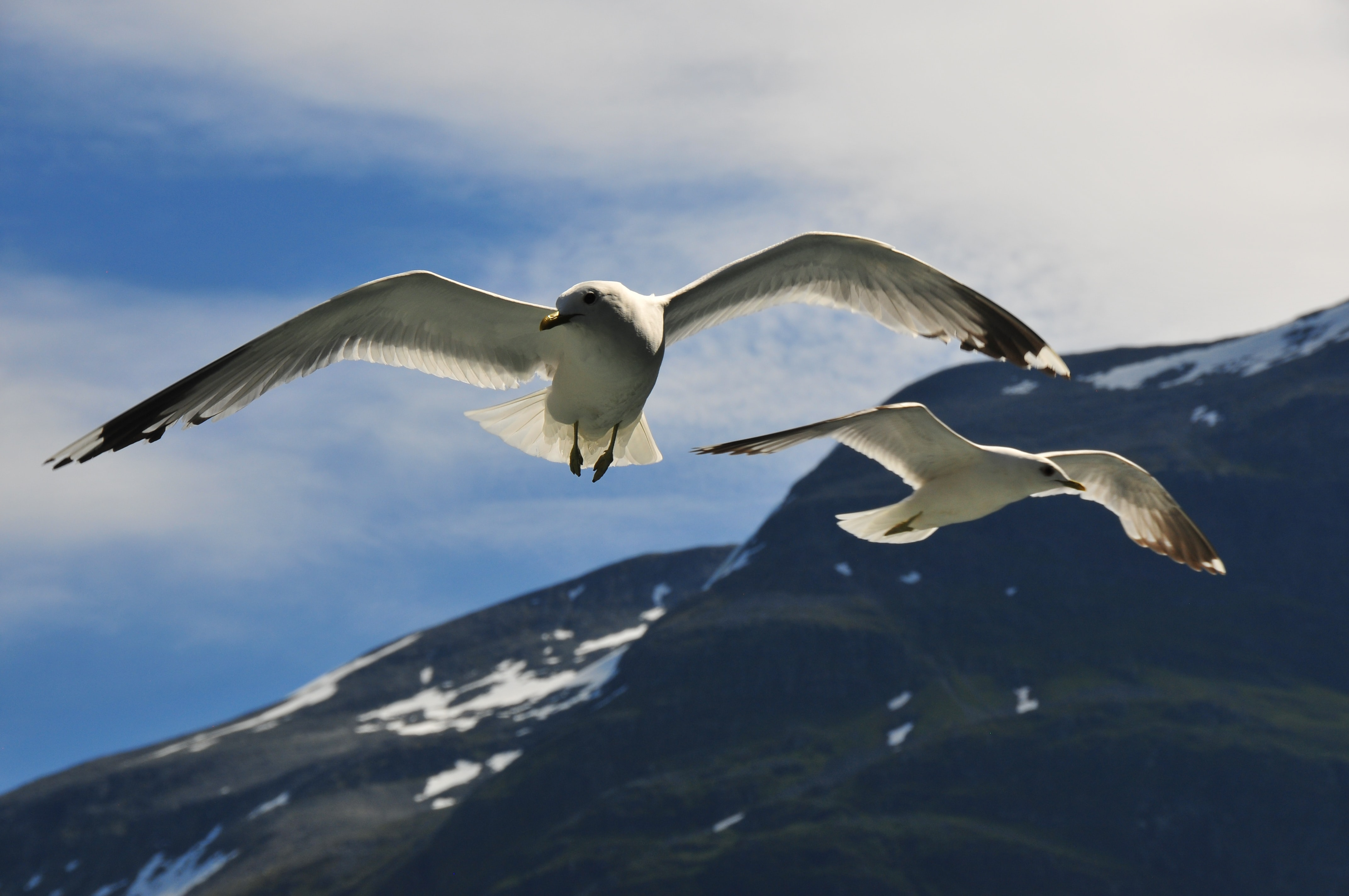 two white bird flying during daytime