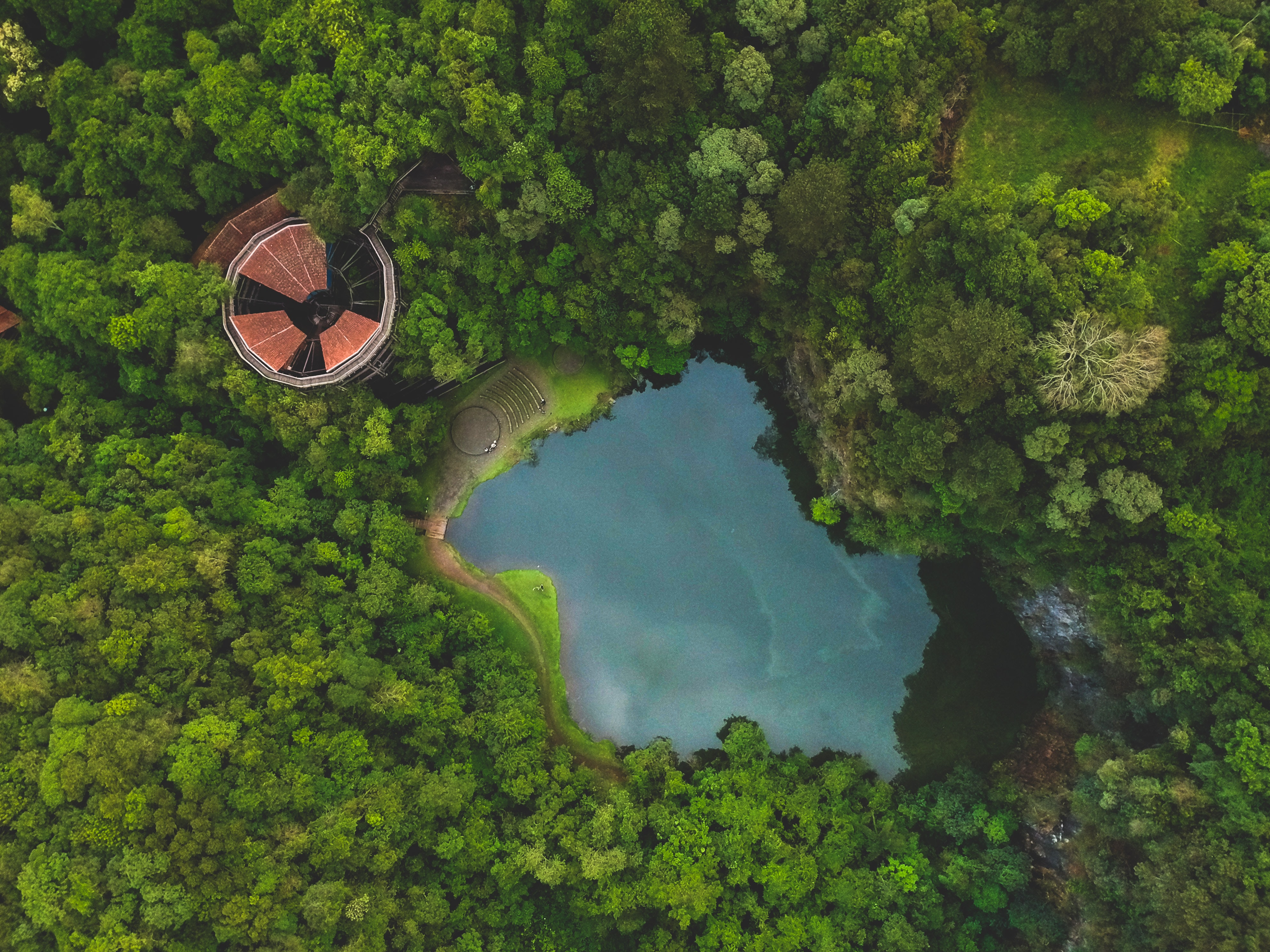 bird's eye photography of body of water and trees