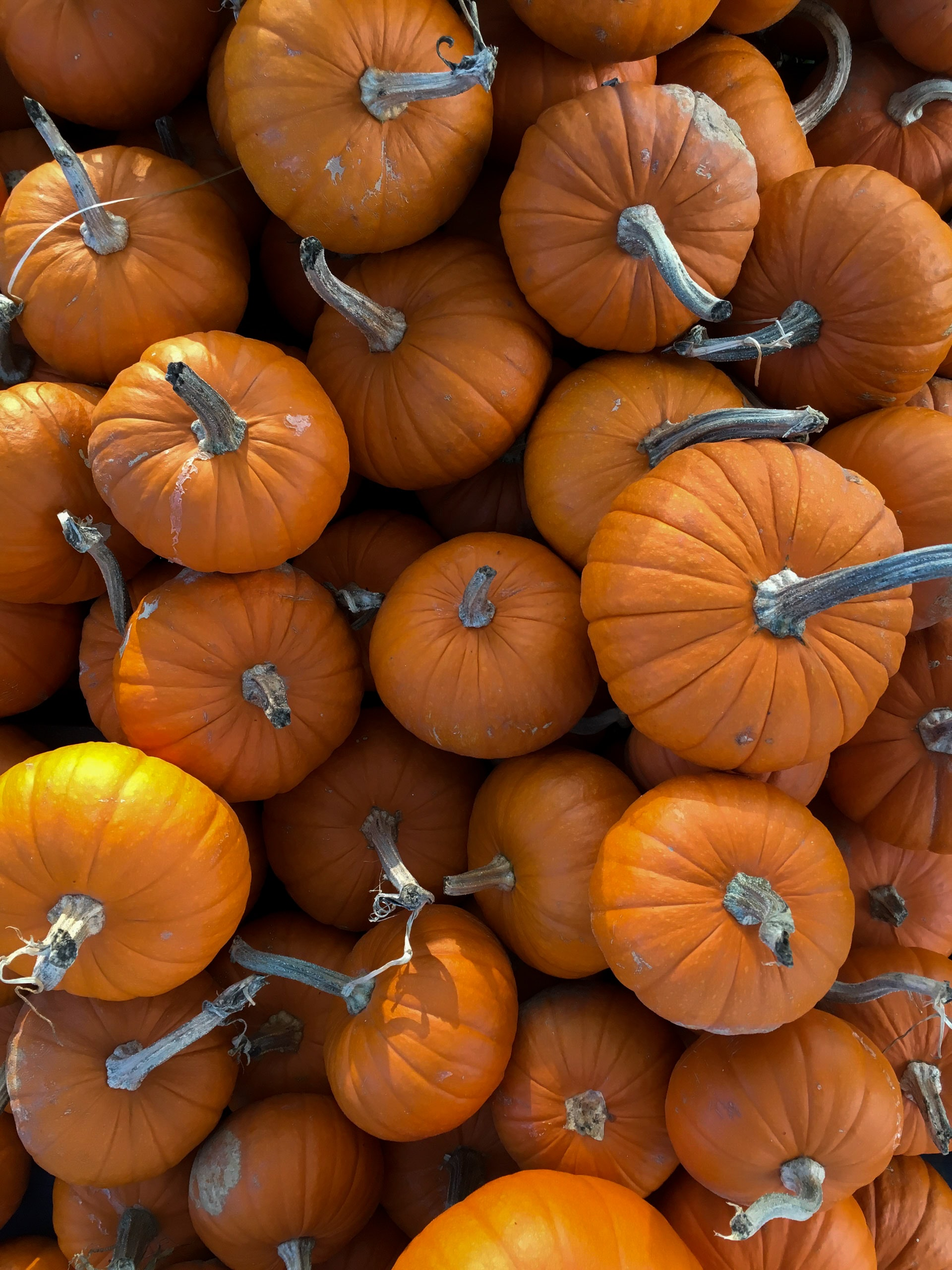 photography of assorted shape pumpkins