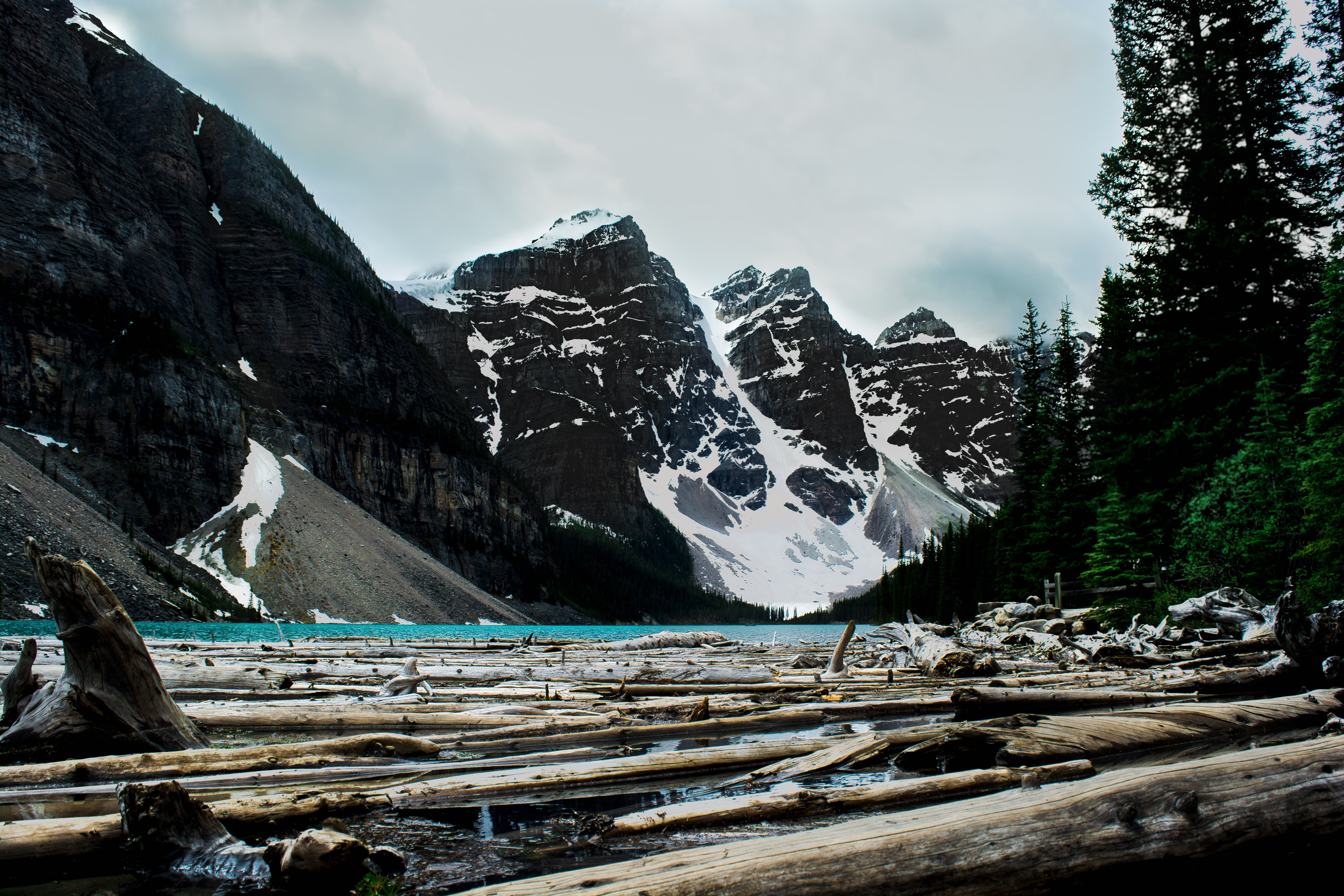 tree logs on body of water under mountains