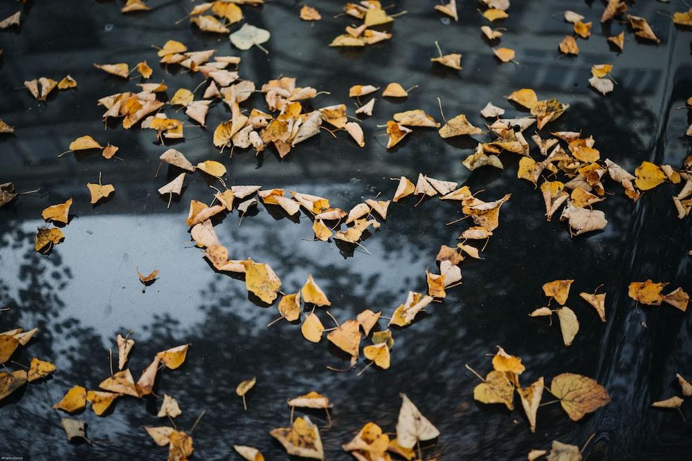 heart-shape brown leaves